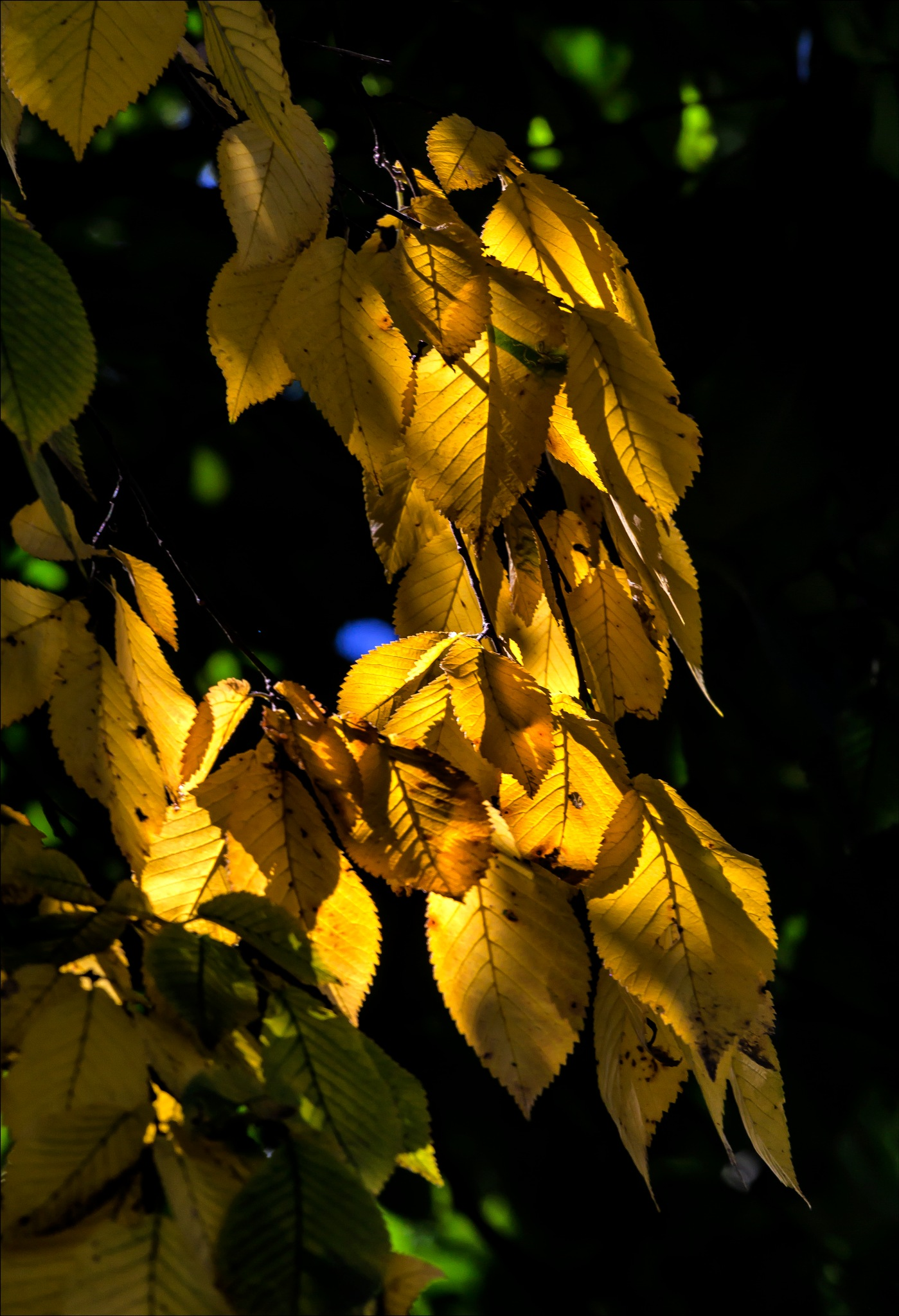 Autumn Leaves by robertullmann