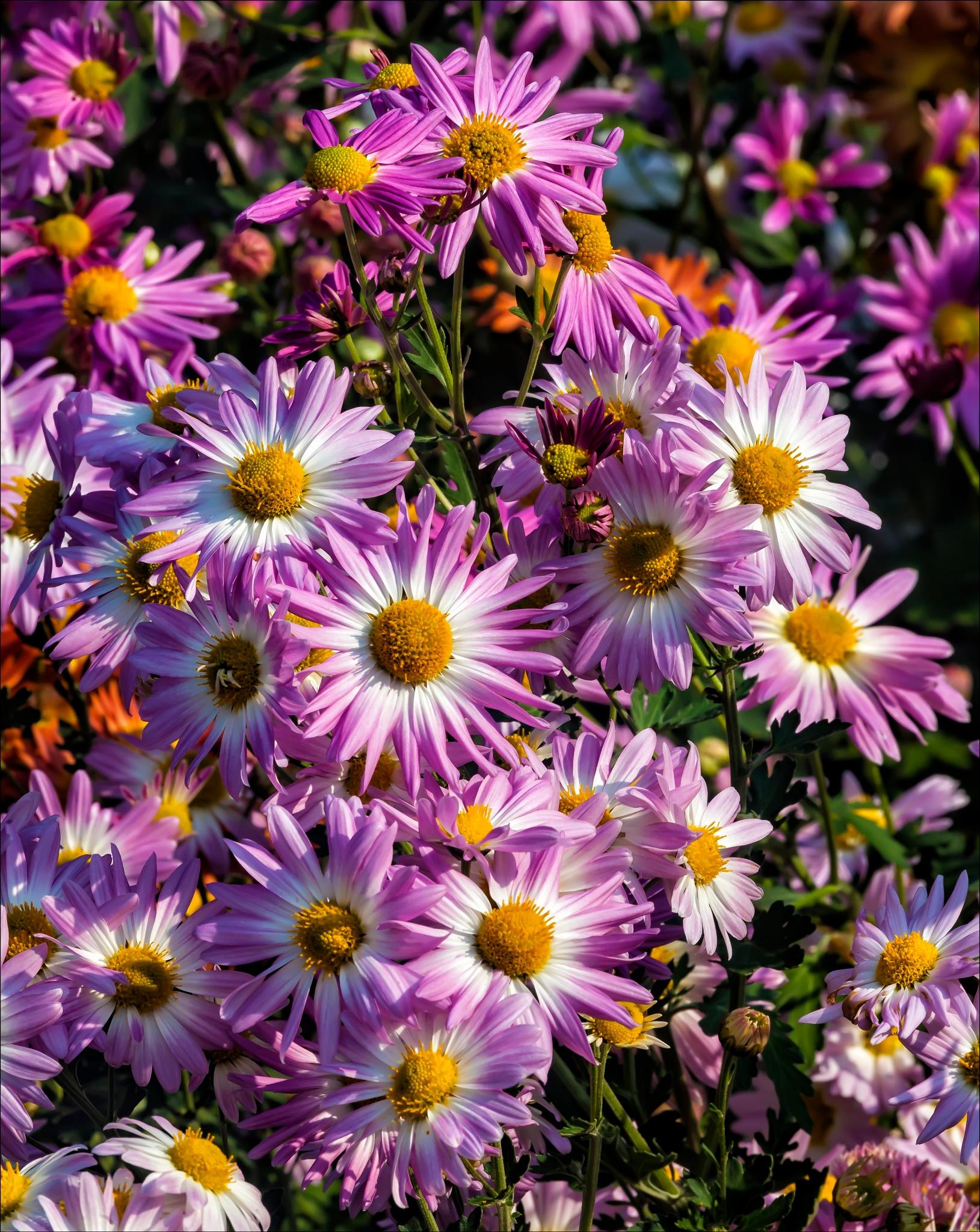 Fall Flowers by robertullmann