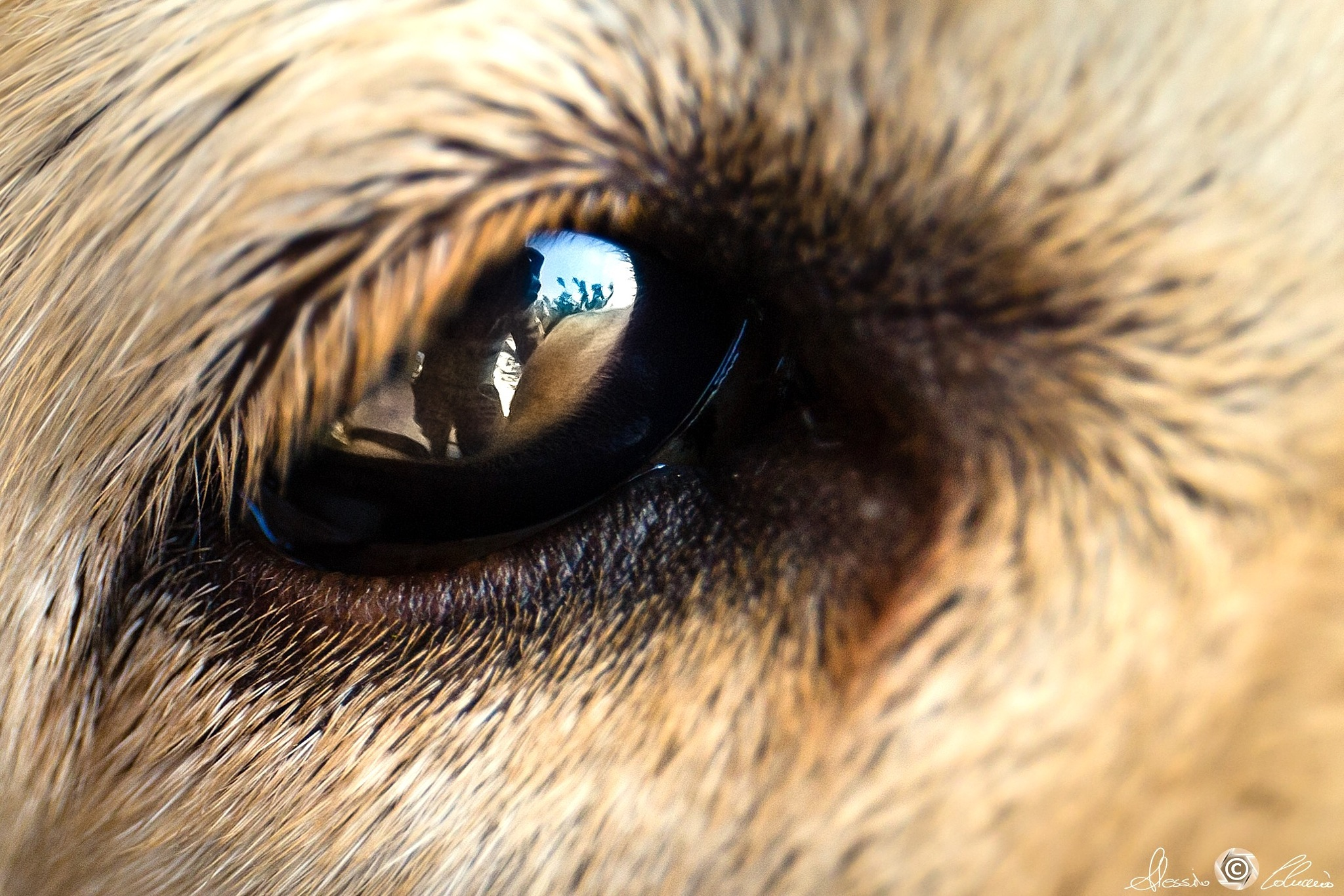 Mirror-eye by Alessio Coluccio