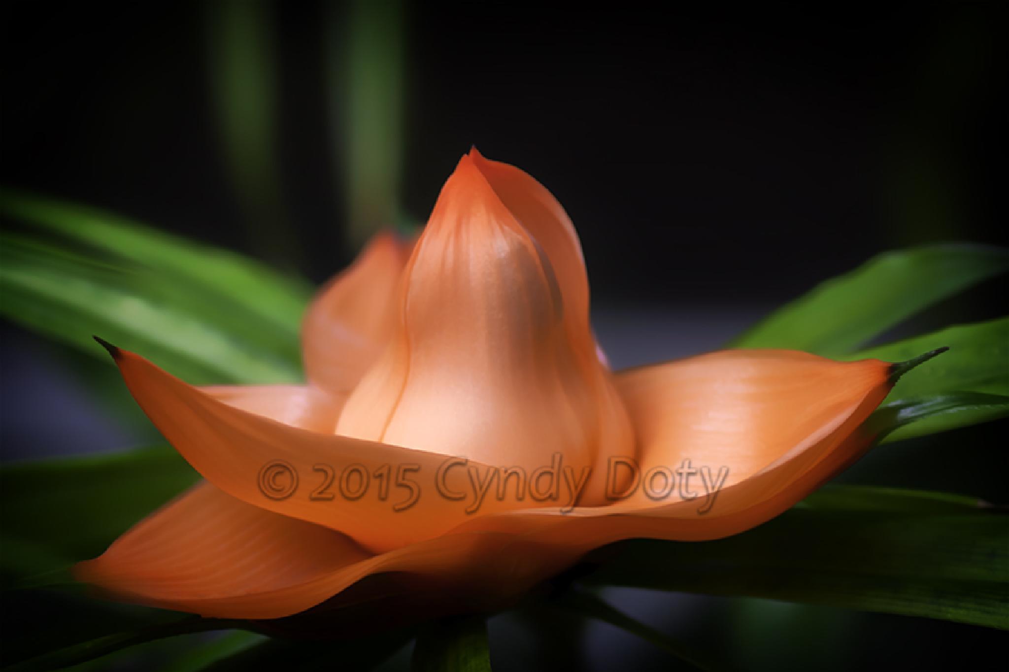 Freycinetia Cumingiana by cd3291982824078