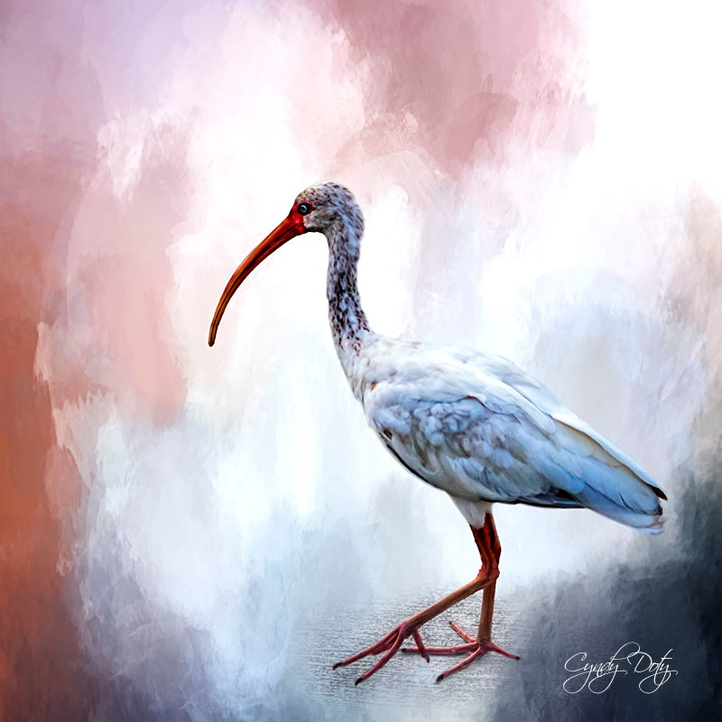 Ibis by cd3291982824078