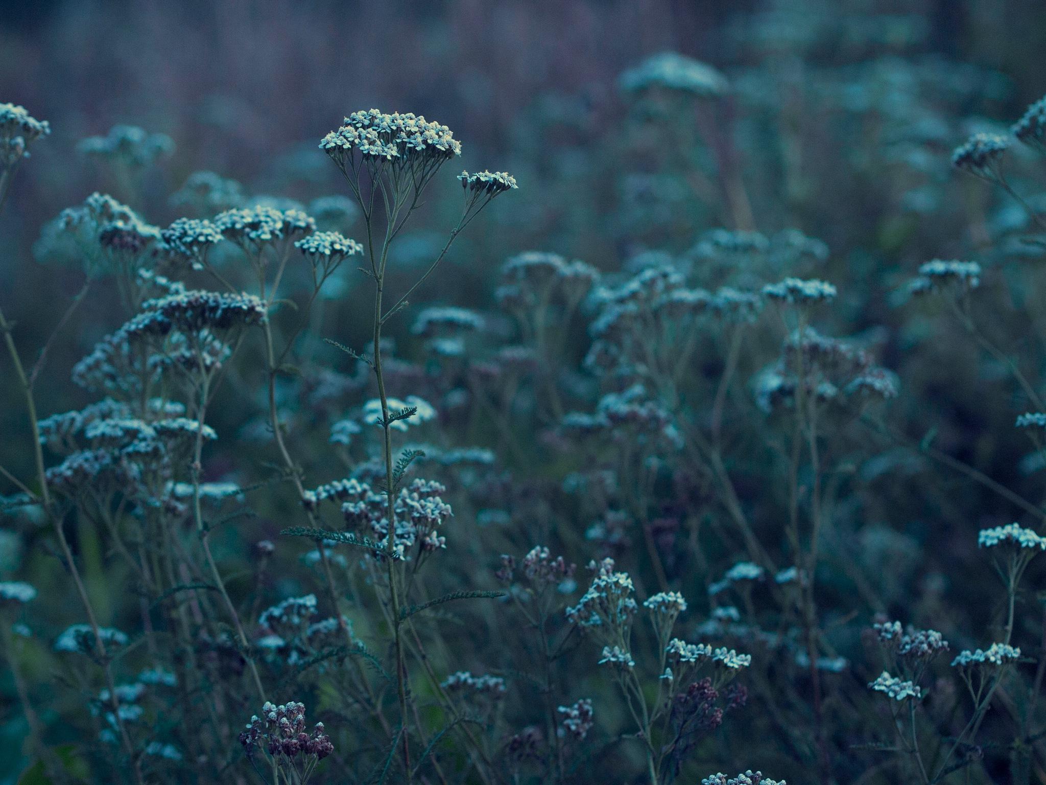 wild flowers by mcajan