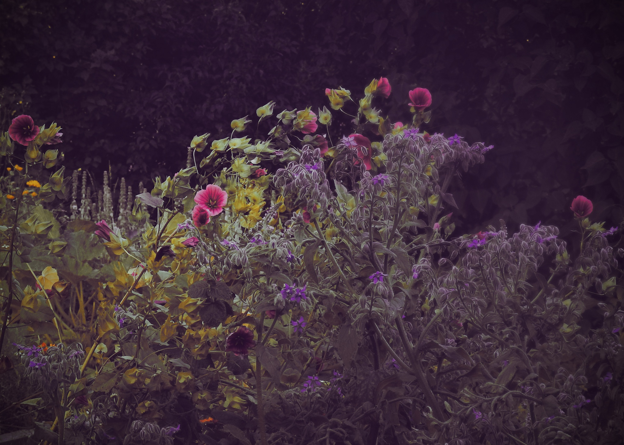 garden 6 by mcajan