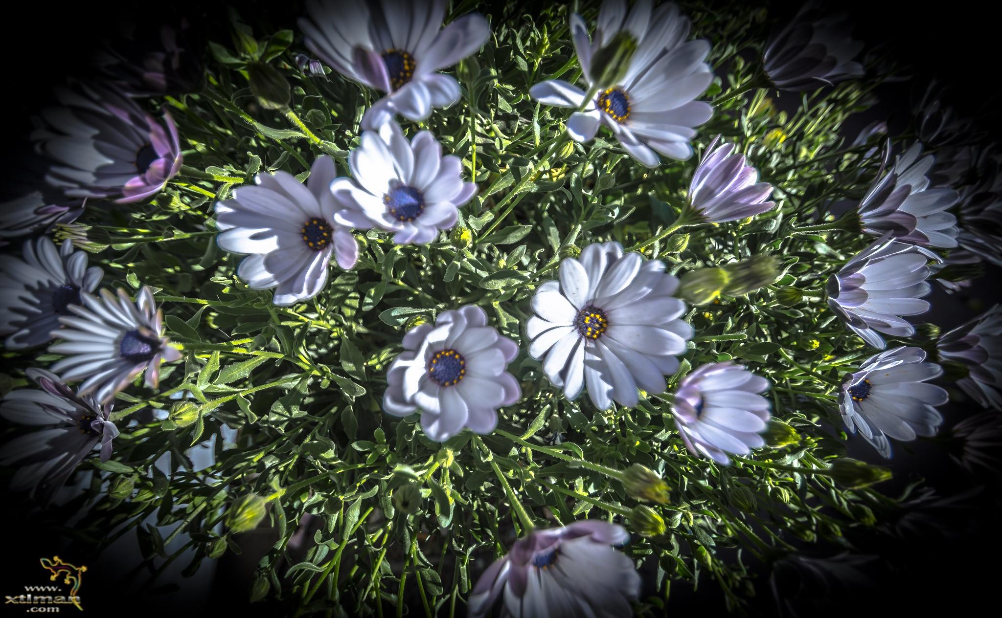 Springtime II by Mark Dunton