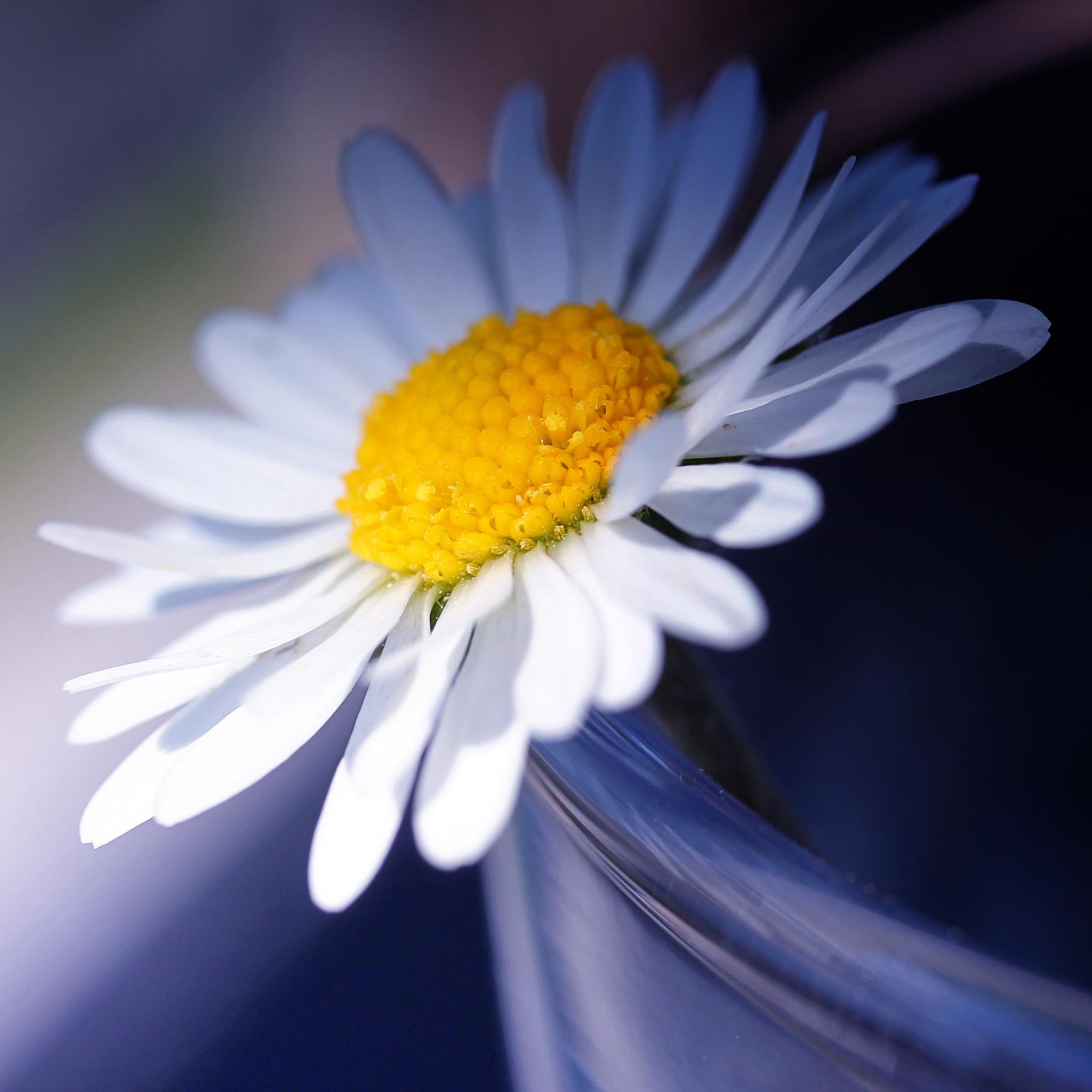 Little flower by Christiaan Waeremoes