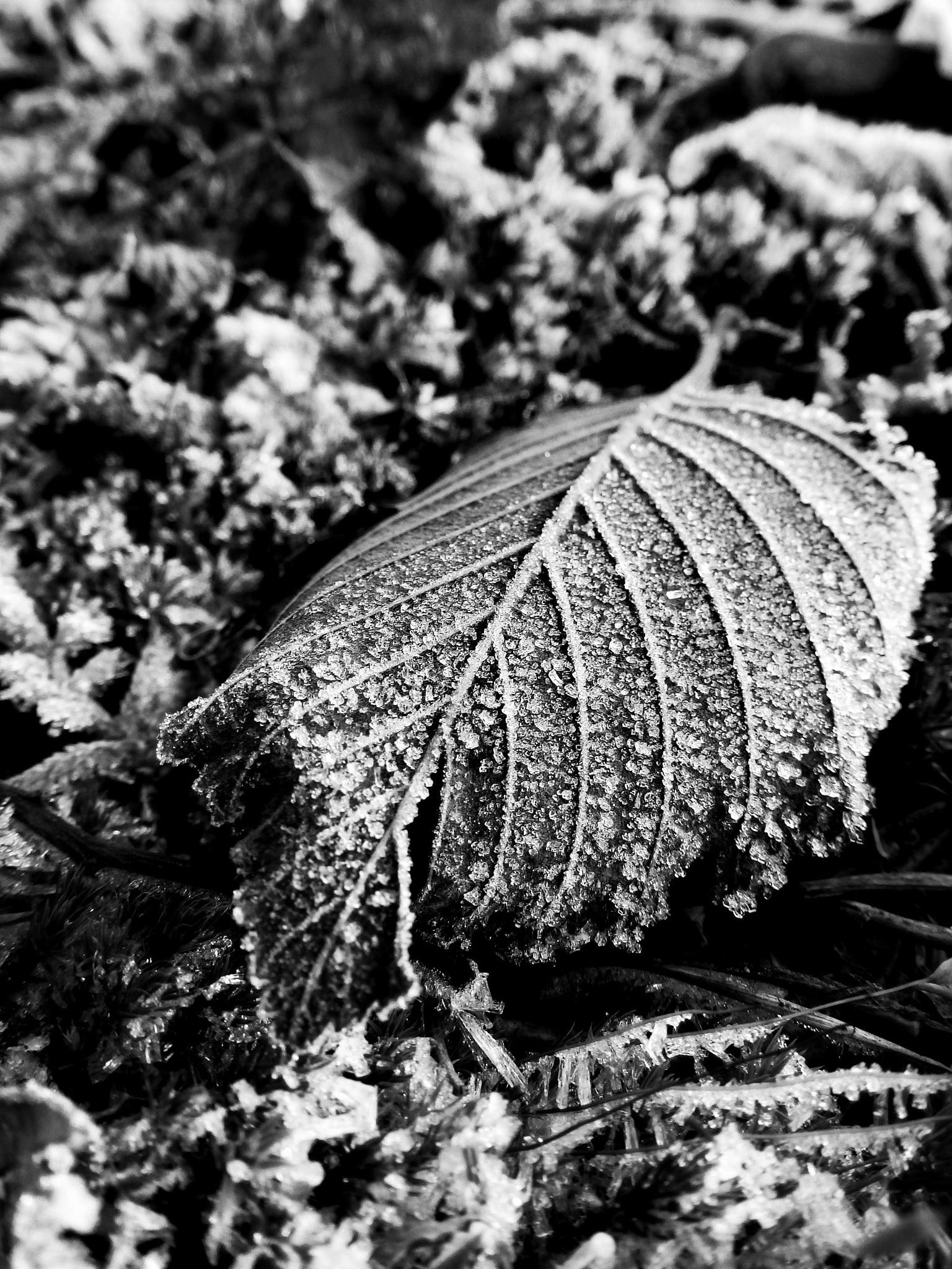 Leaf by PiiaP