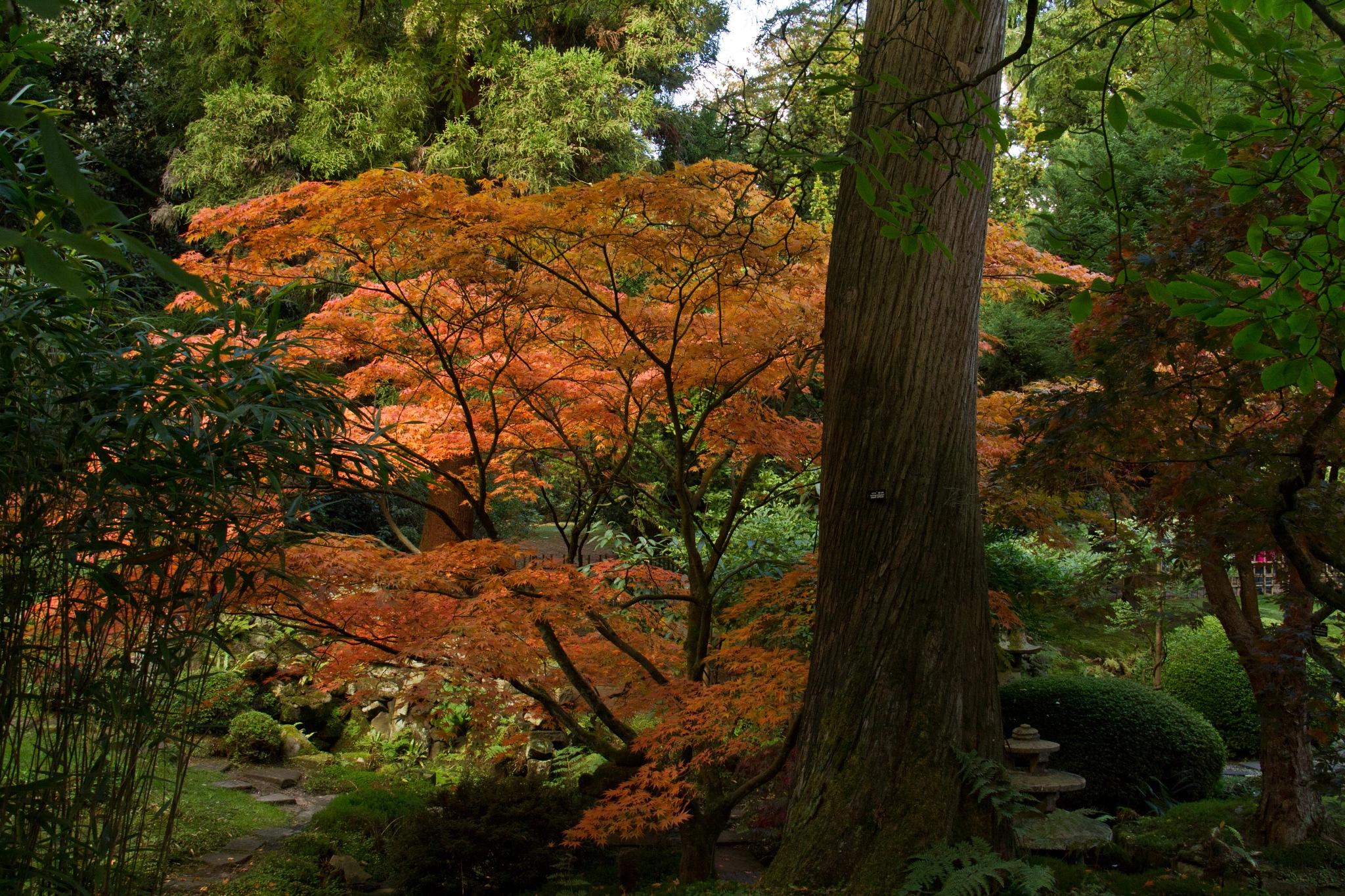 Autumn Colour 6 by Andrew Fairclough