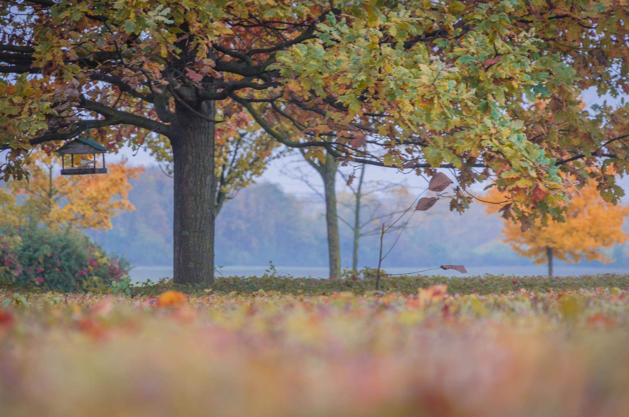 autumn by radkamileva
