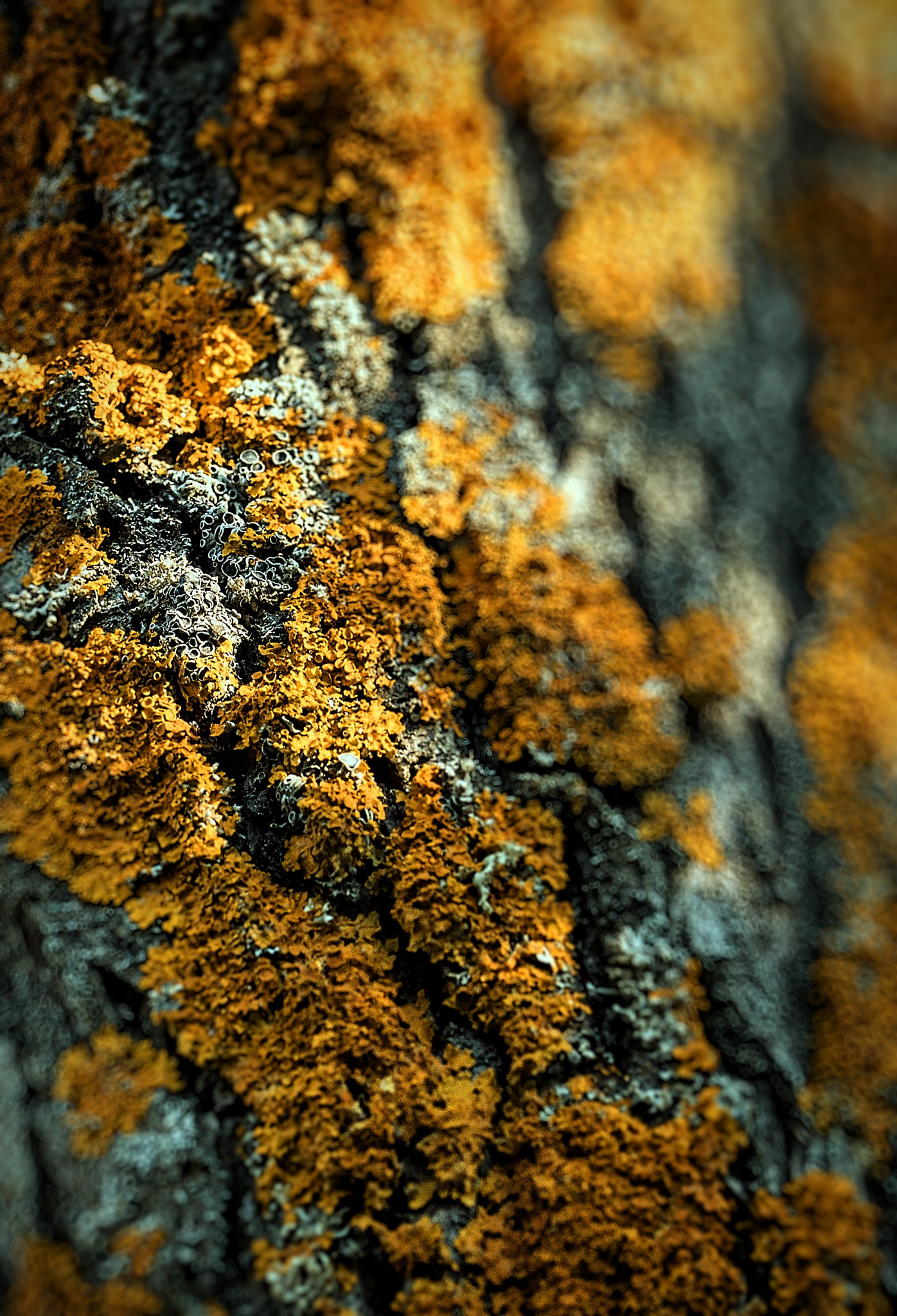 tree bark mushrooms... by Robert Mikk