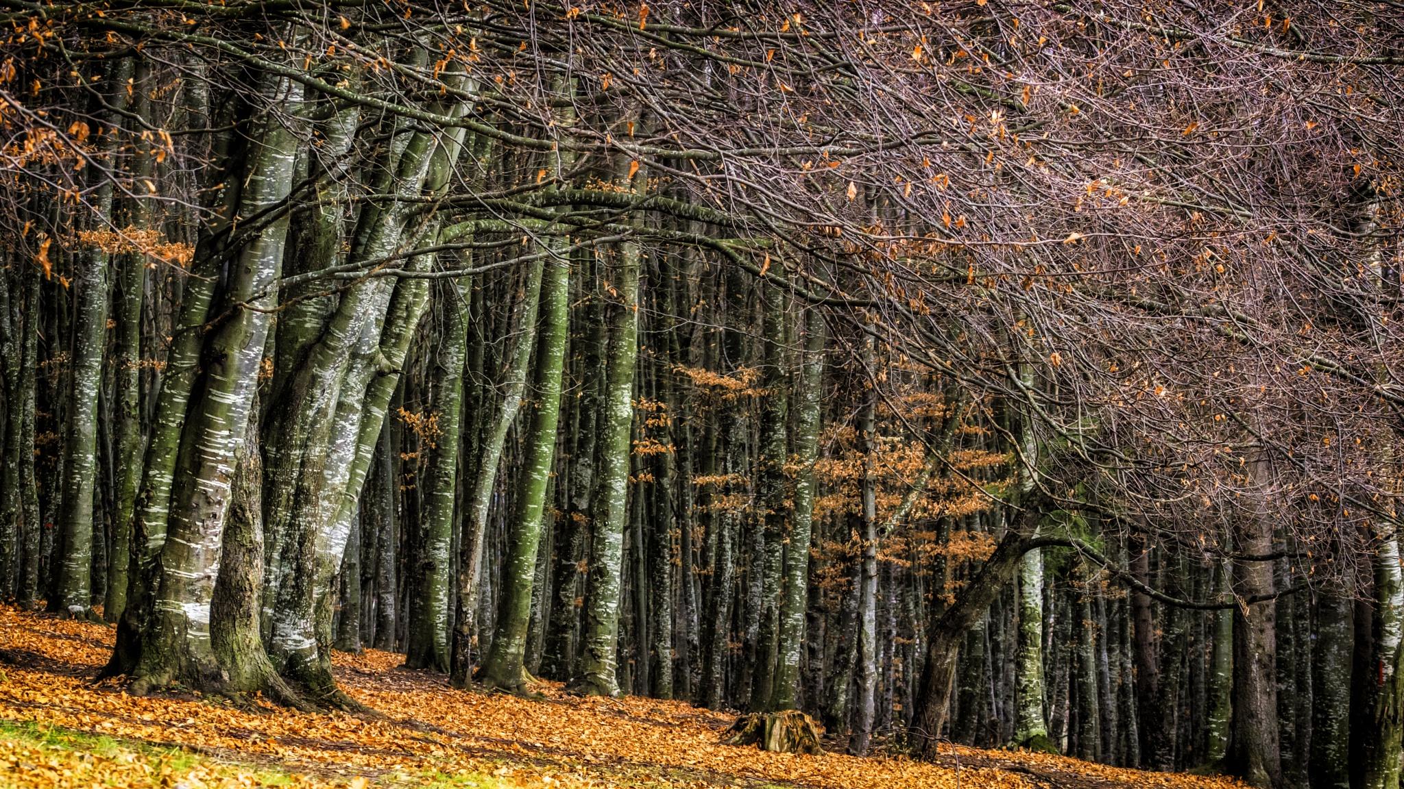 forest walk... by Robert Mikk