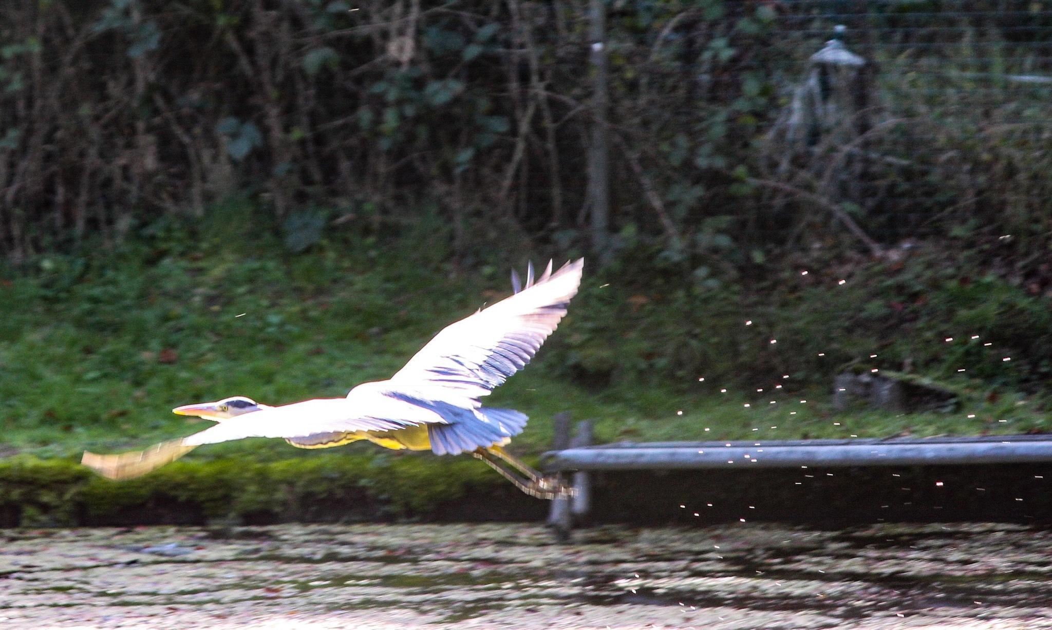 stream line Heron by Terry Reynolds