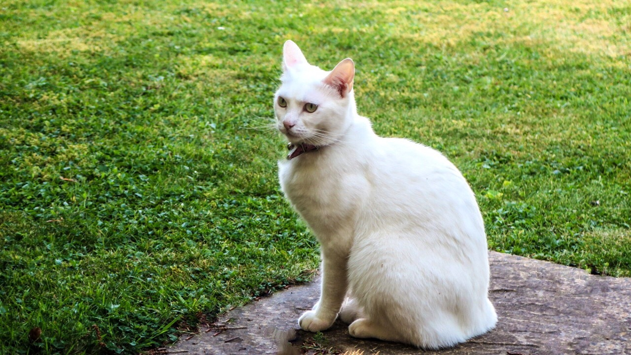 a white cat by Terry Reynolds