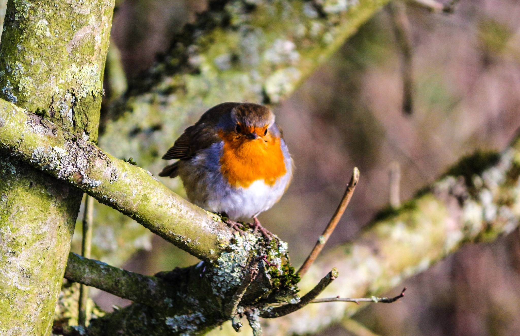 A little robin by Terry Reynolds