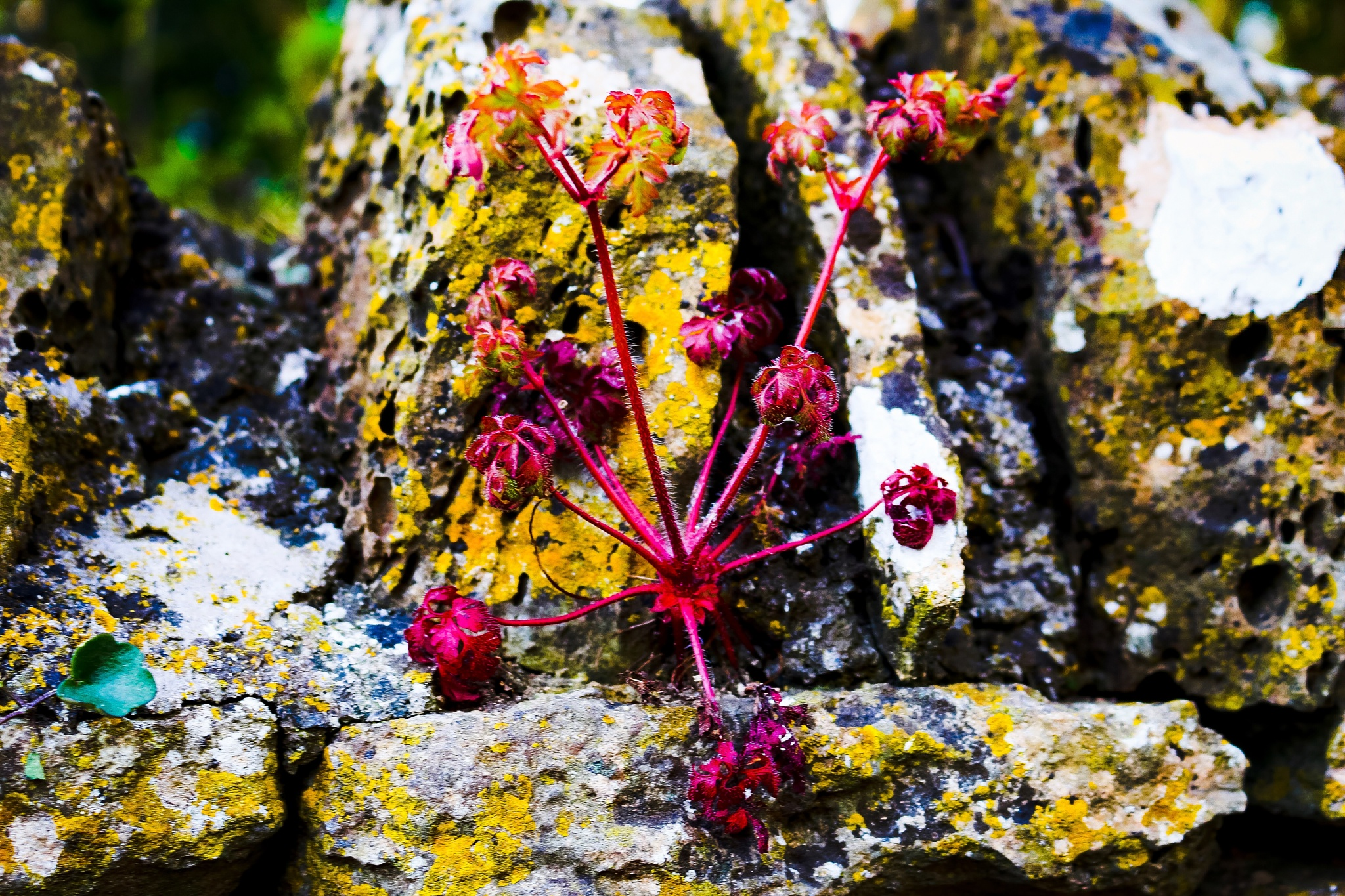 Srange things growing out of a wall by Terry Reynolds
