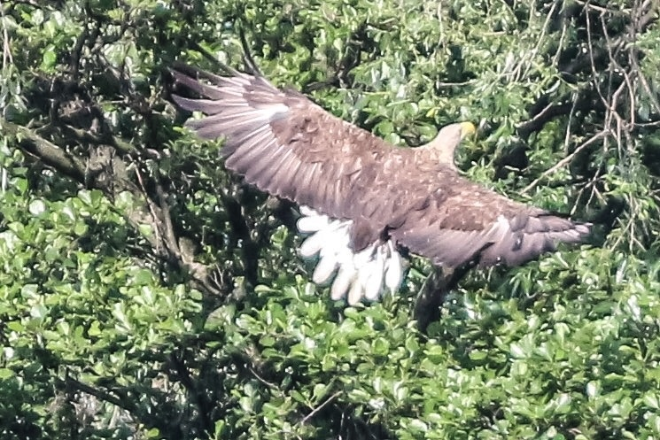 A snap shot of a eagle  by Terry Reynolds