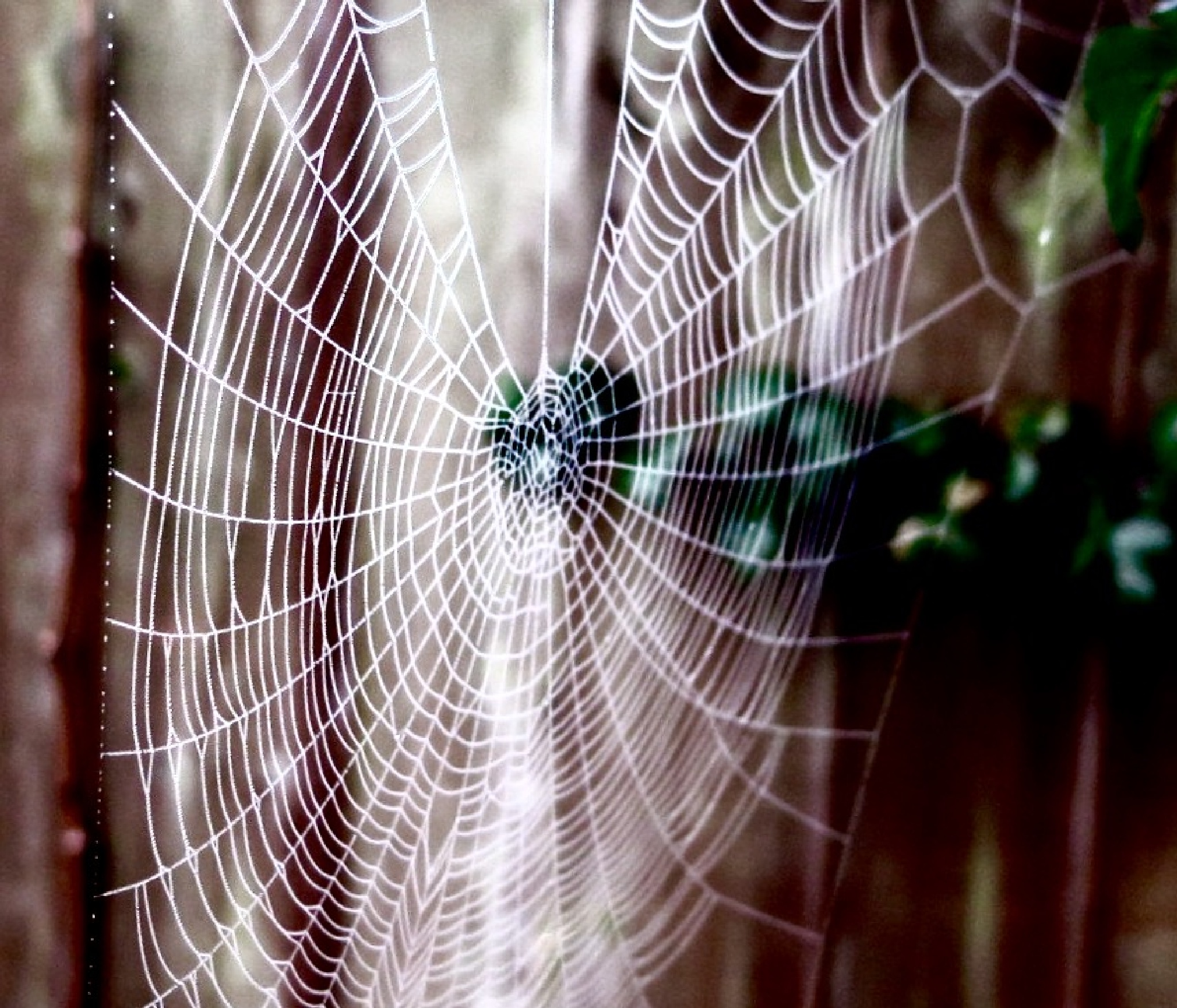 Spiders web by Terry Reynolds