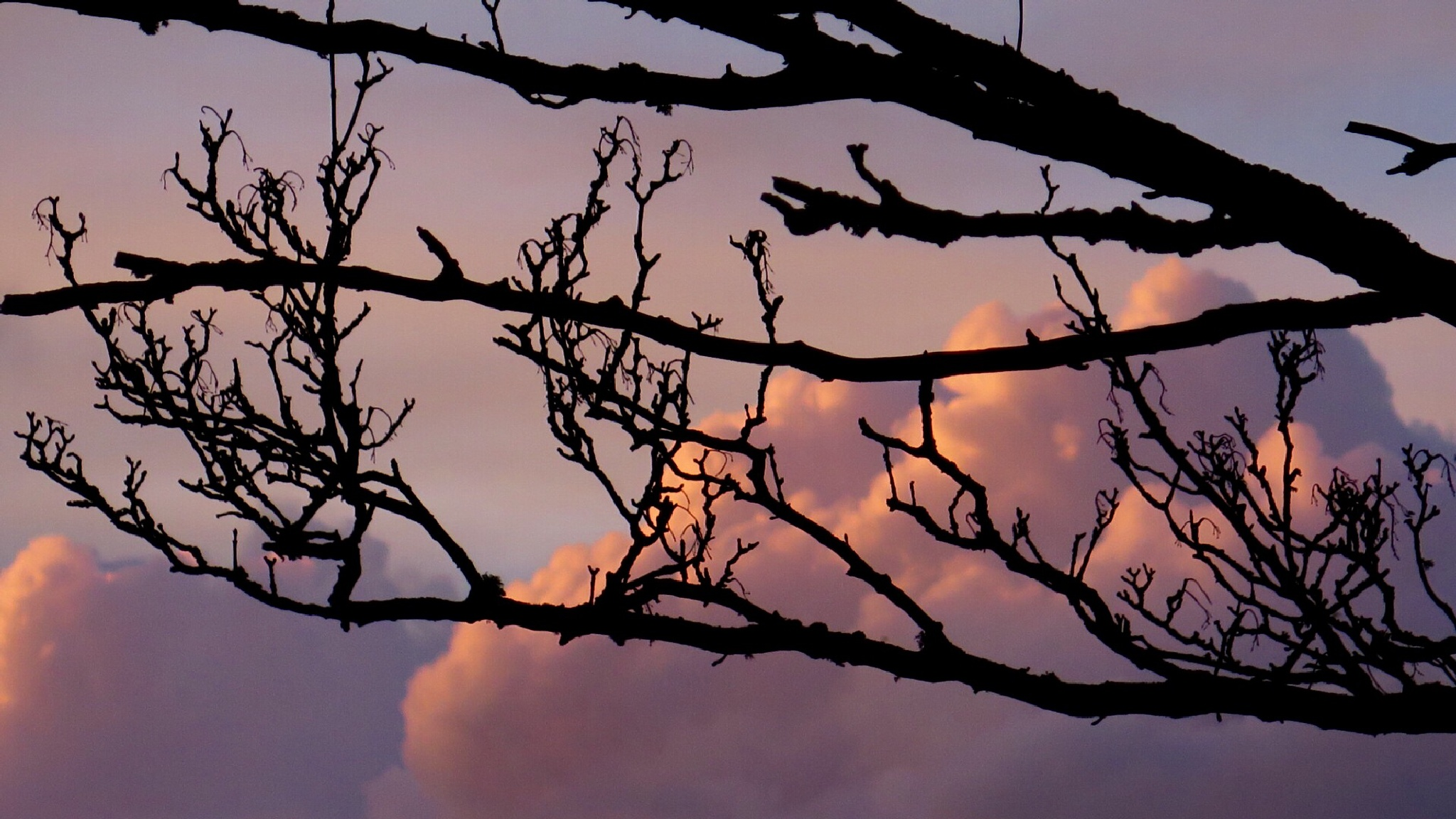Branch out with clouds behind you by Terry Reynolds