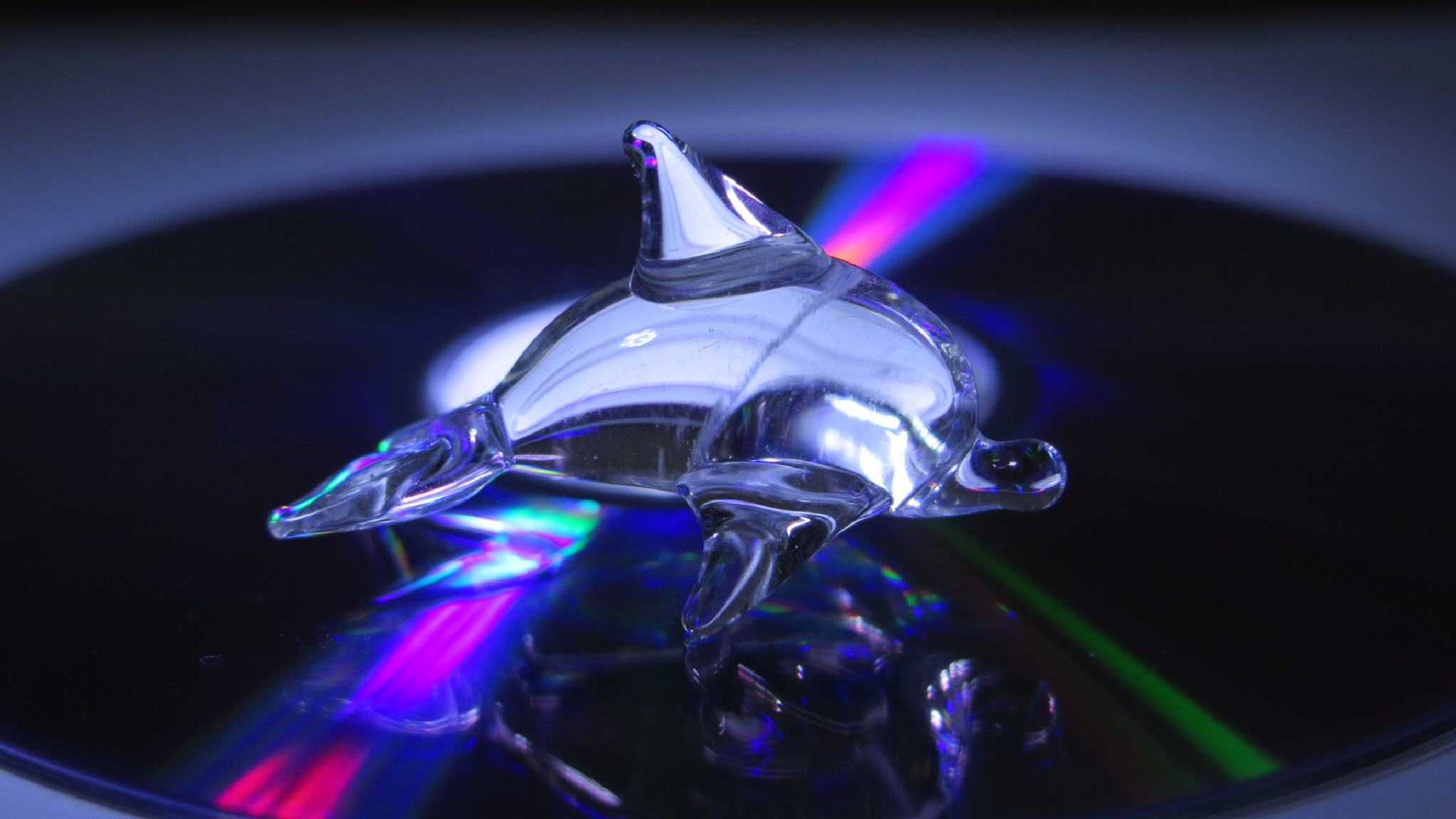 A dolphin on a cd by Terry Reynolds