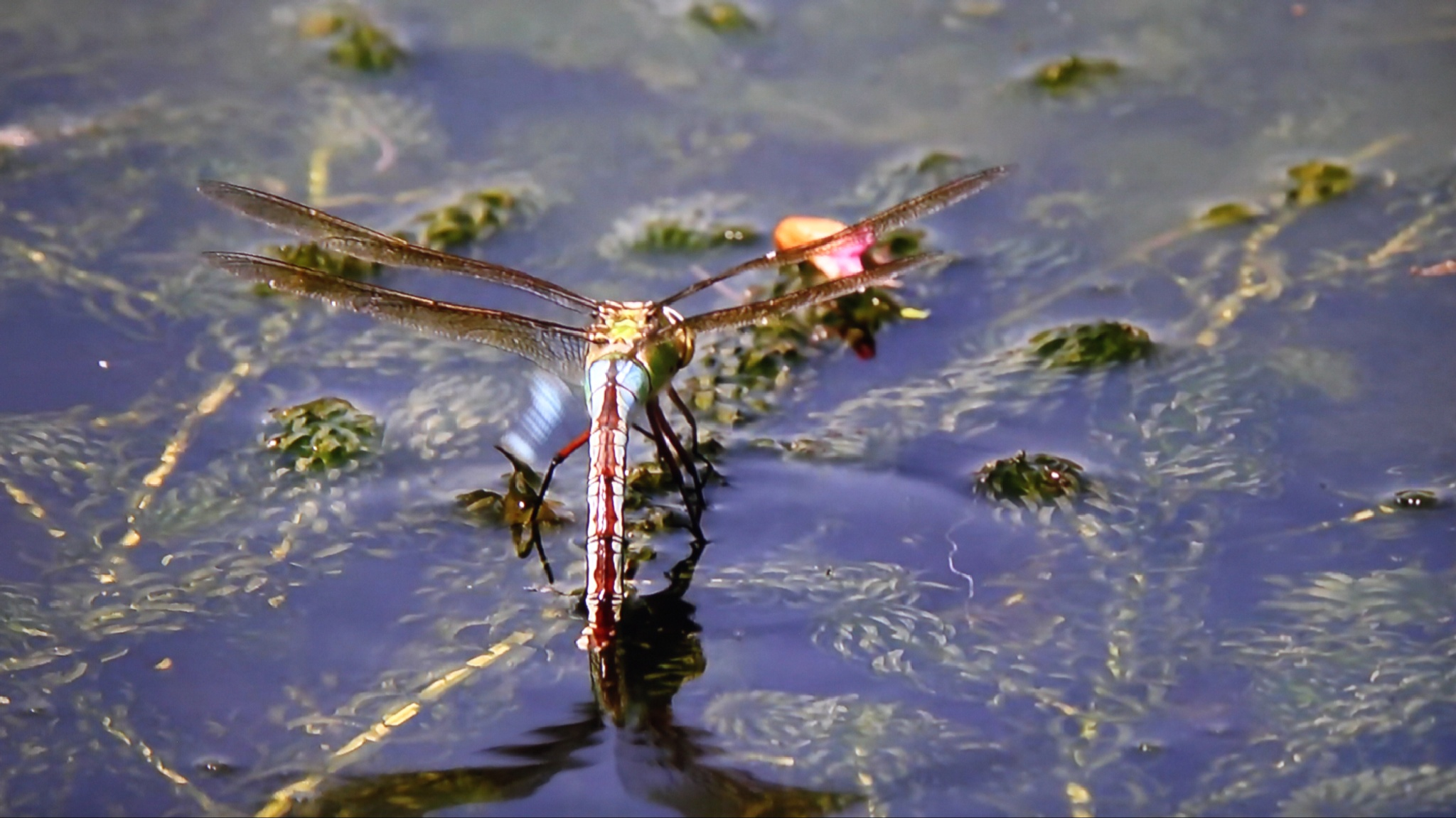 a dragon fly by Terry Reynolds