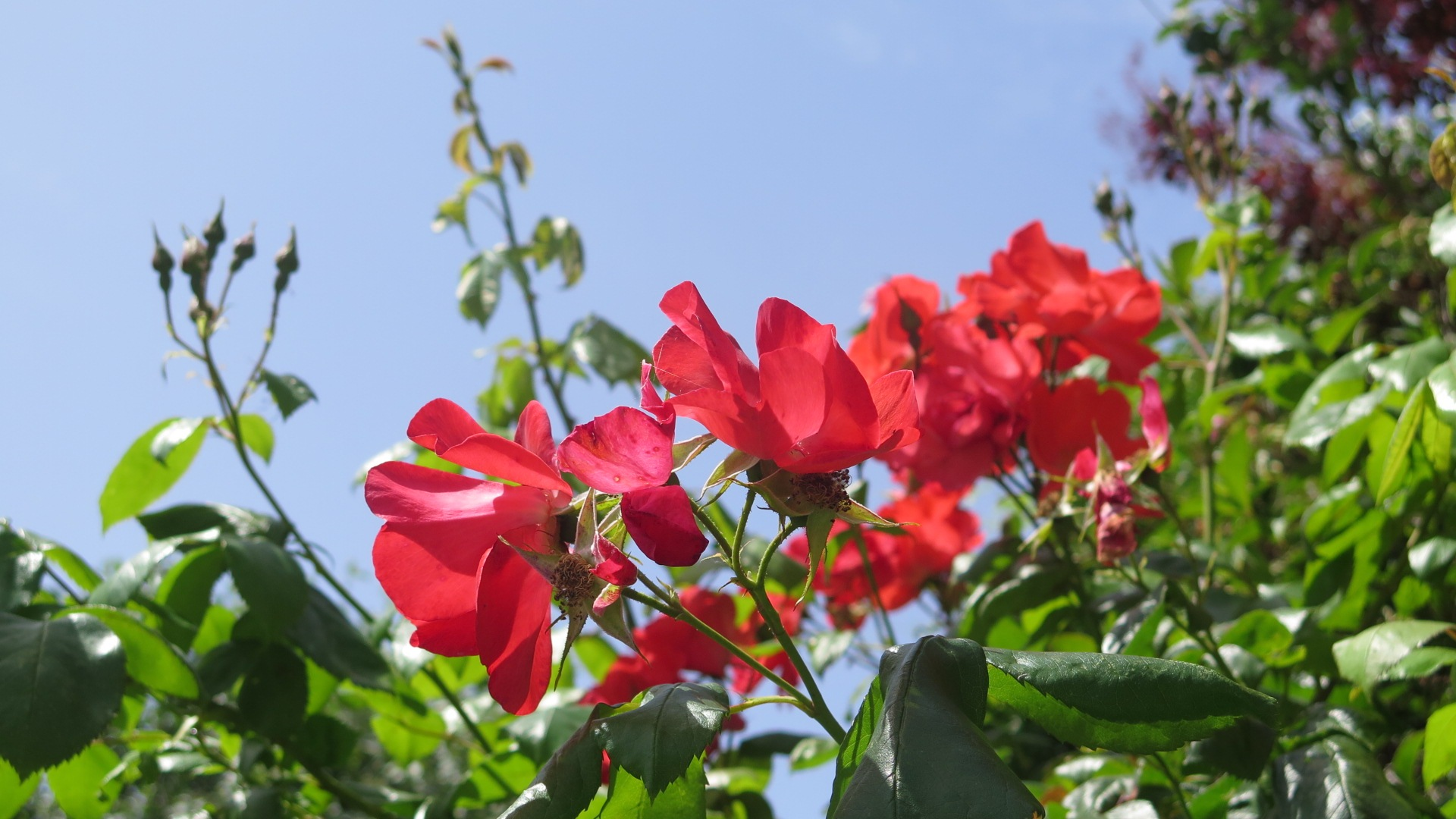 flowers and blue sky                                 by Terry Reynolds