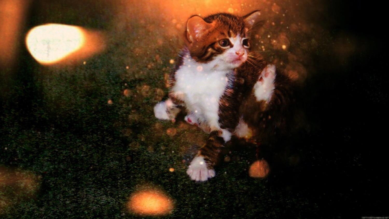 My kitten in lights by Terry Reynolds