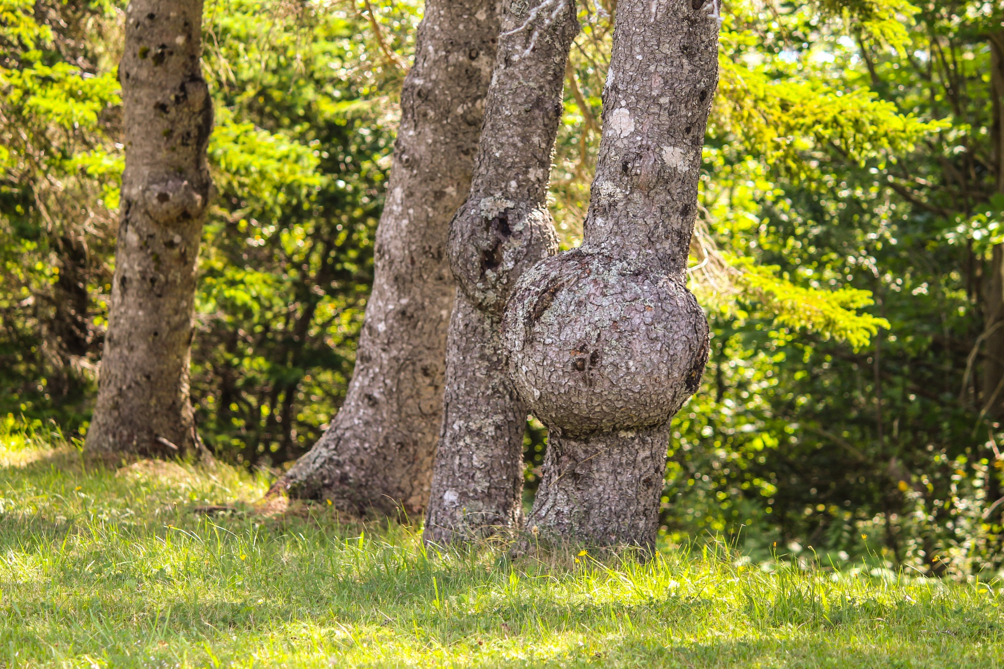 Knobbly trees by Terry Reynolds