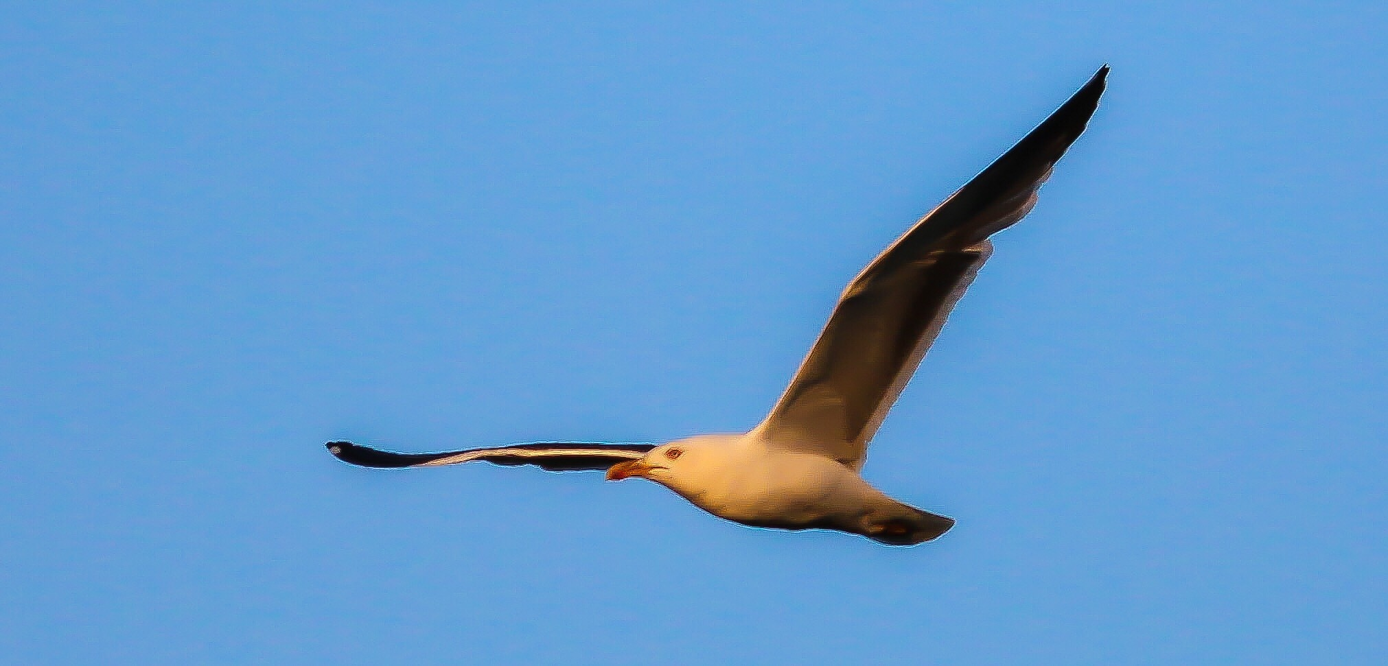Full flight by Terry Reynolds
