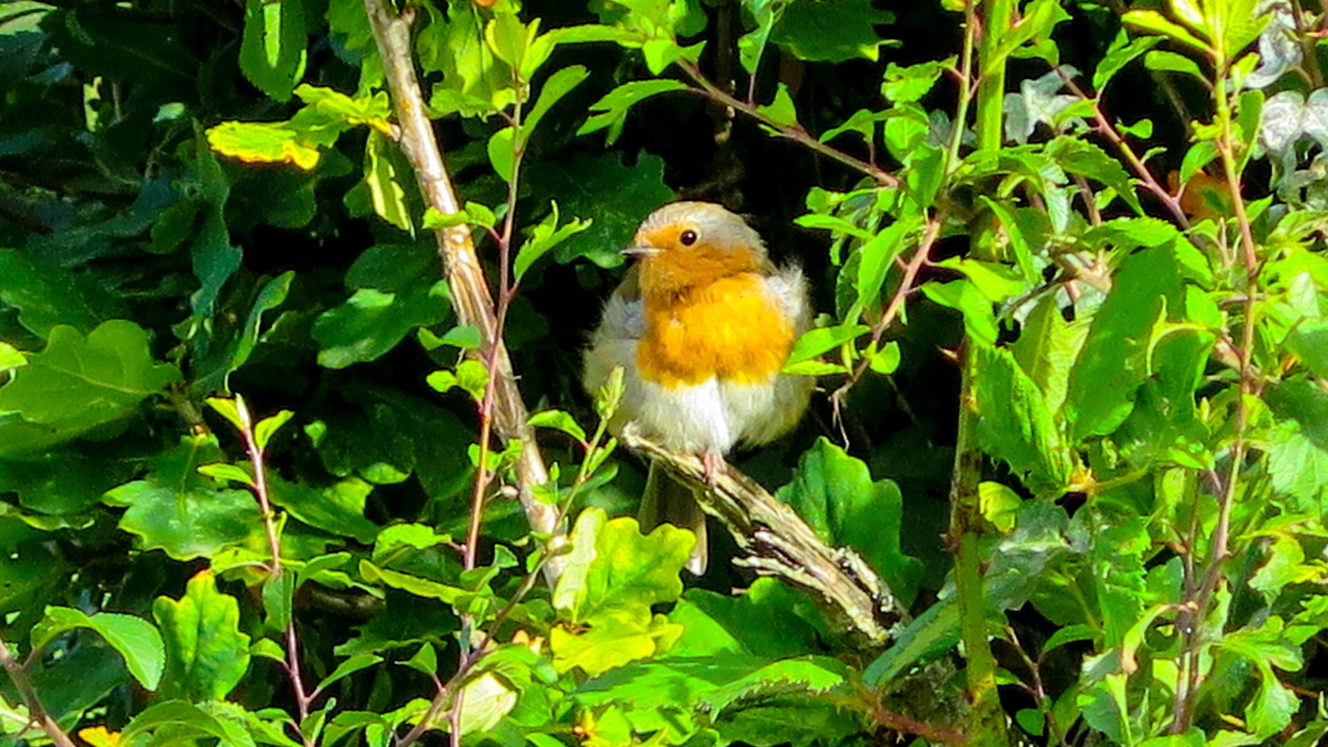 Baby Robin by Terry Reynolds