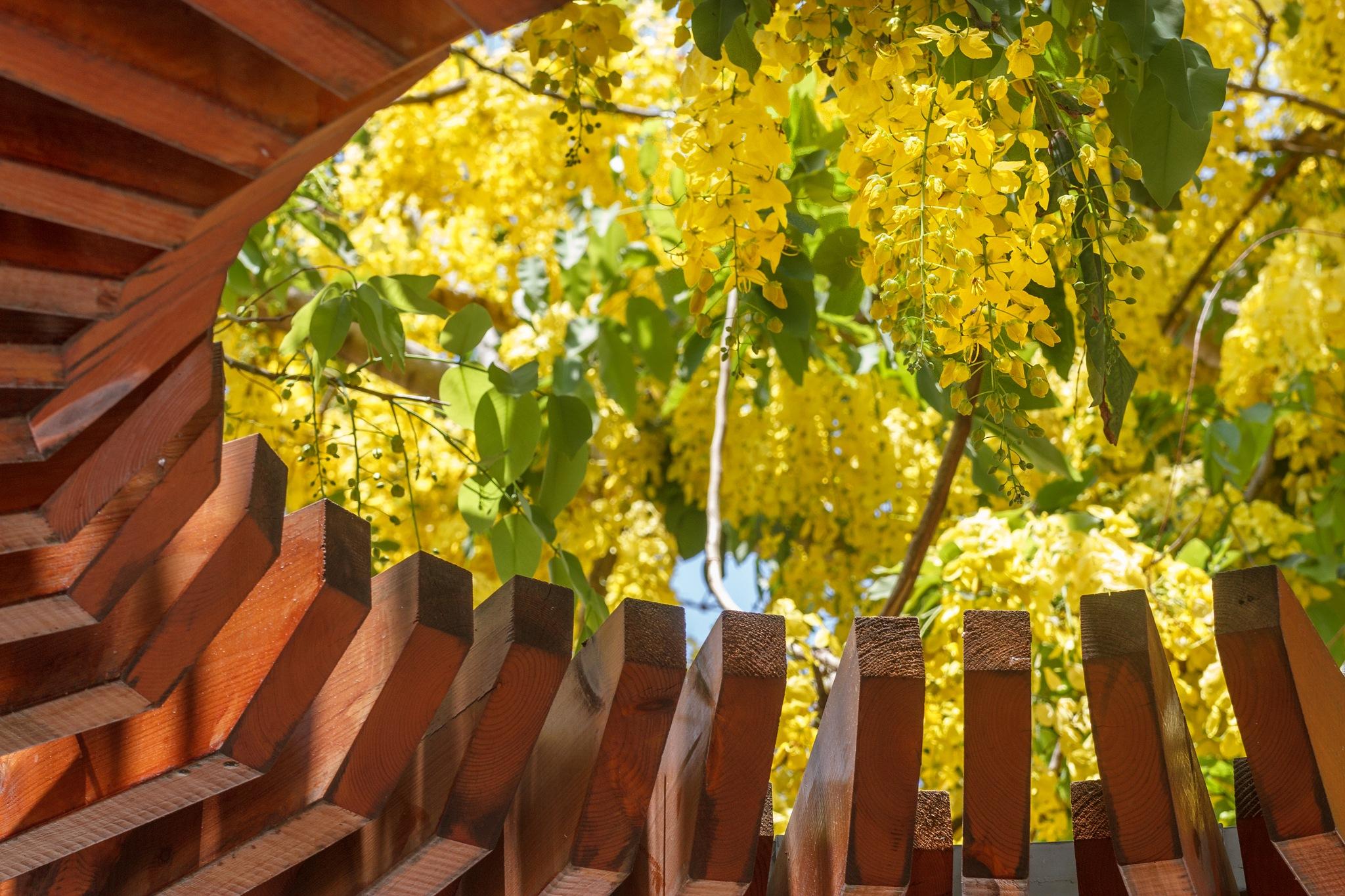 Blossom #2 by Anatoly Vinokurov