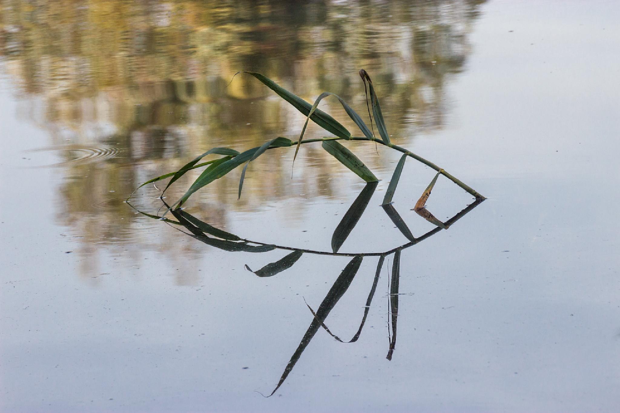 "Reflection - Imagination - ""Fish"" by Anatoly Vinokurov"