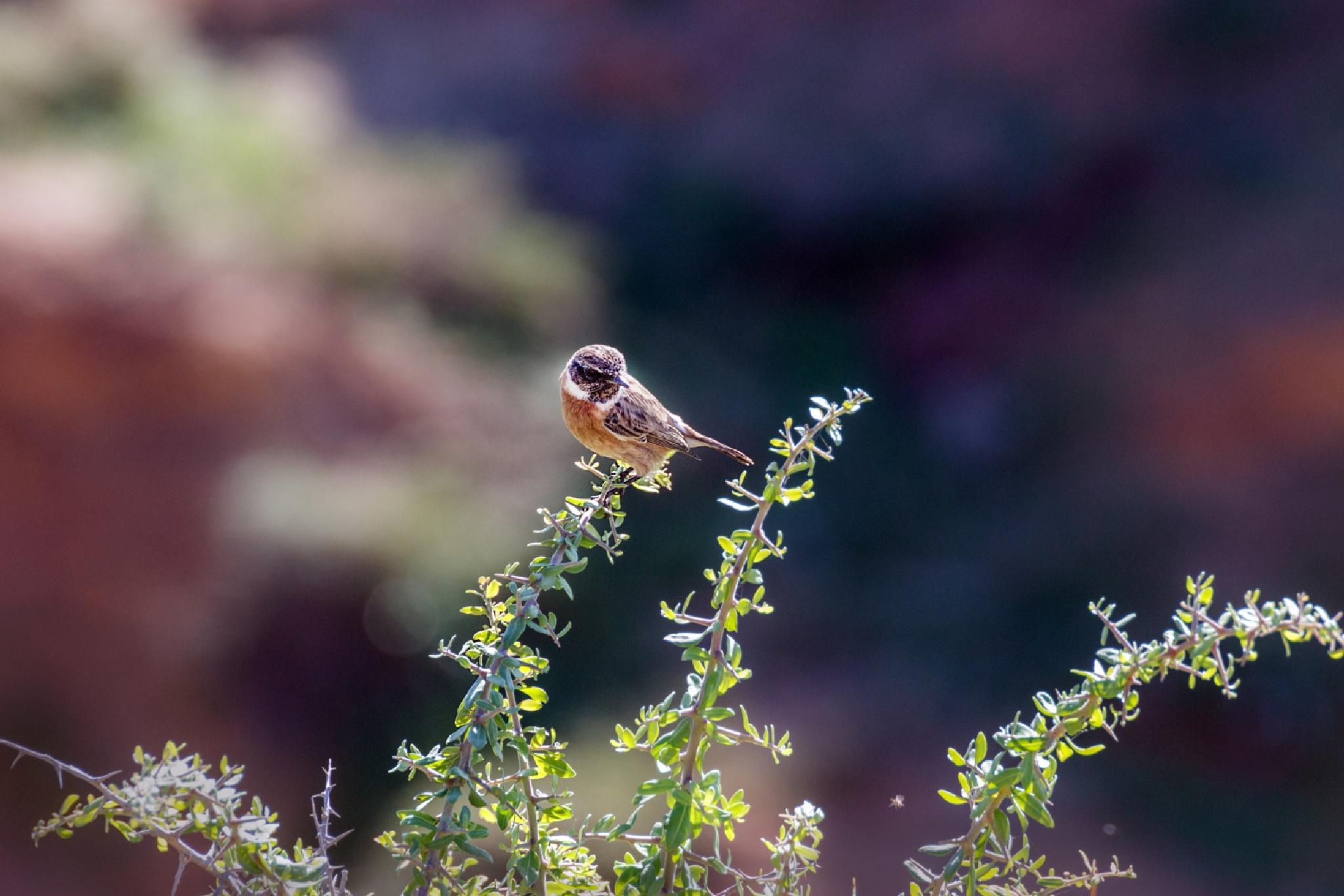 A little bird by Anatoly Vinokurov