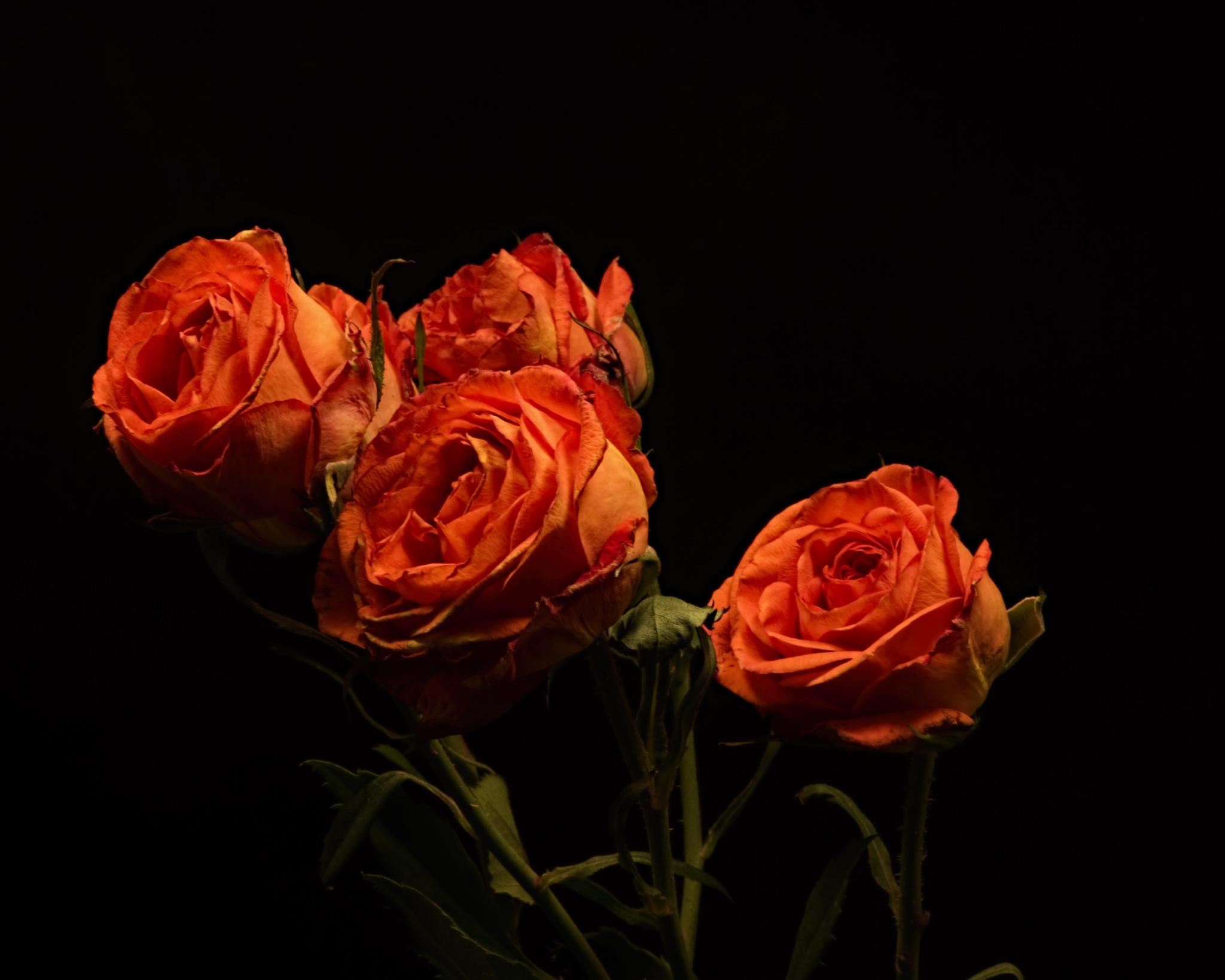 Orange Spray Roses 0102 by ThomasJerger