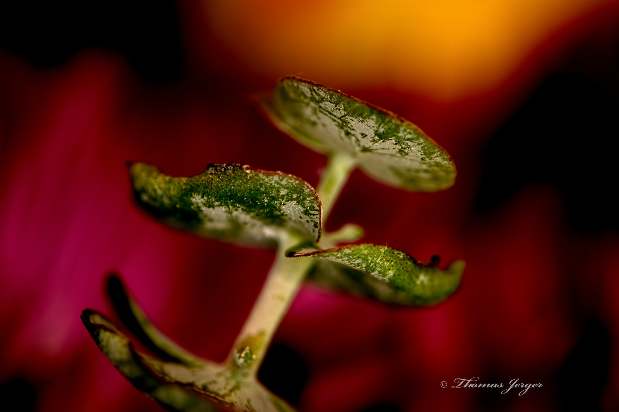 Green on a Wash of Color 0228 by ThomasJerger
