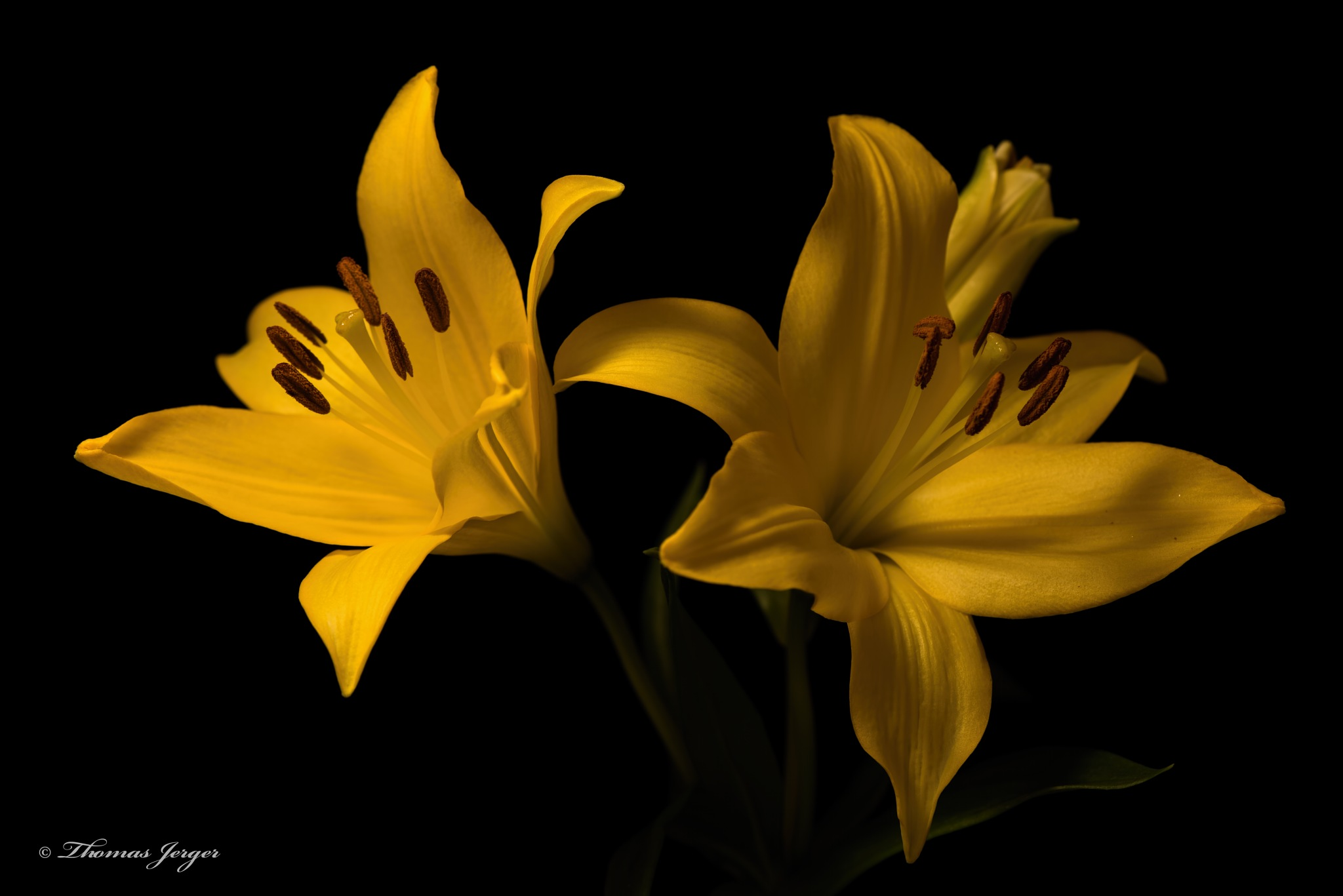 Yellow Pair 0914 by ThomasJerger
