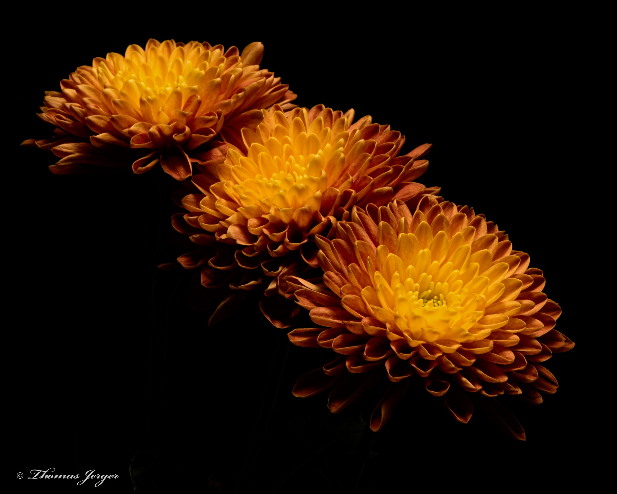 Autumn Mum Trio 1002 by ThomasJerger