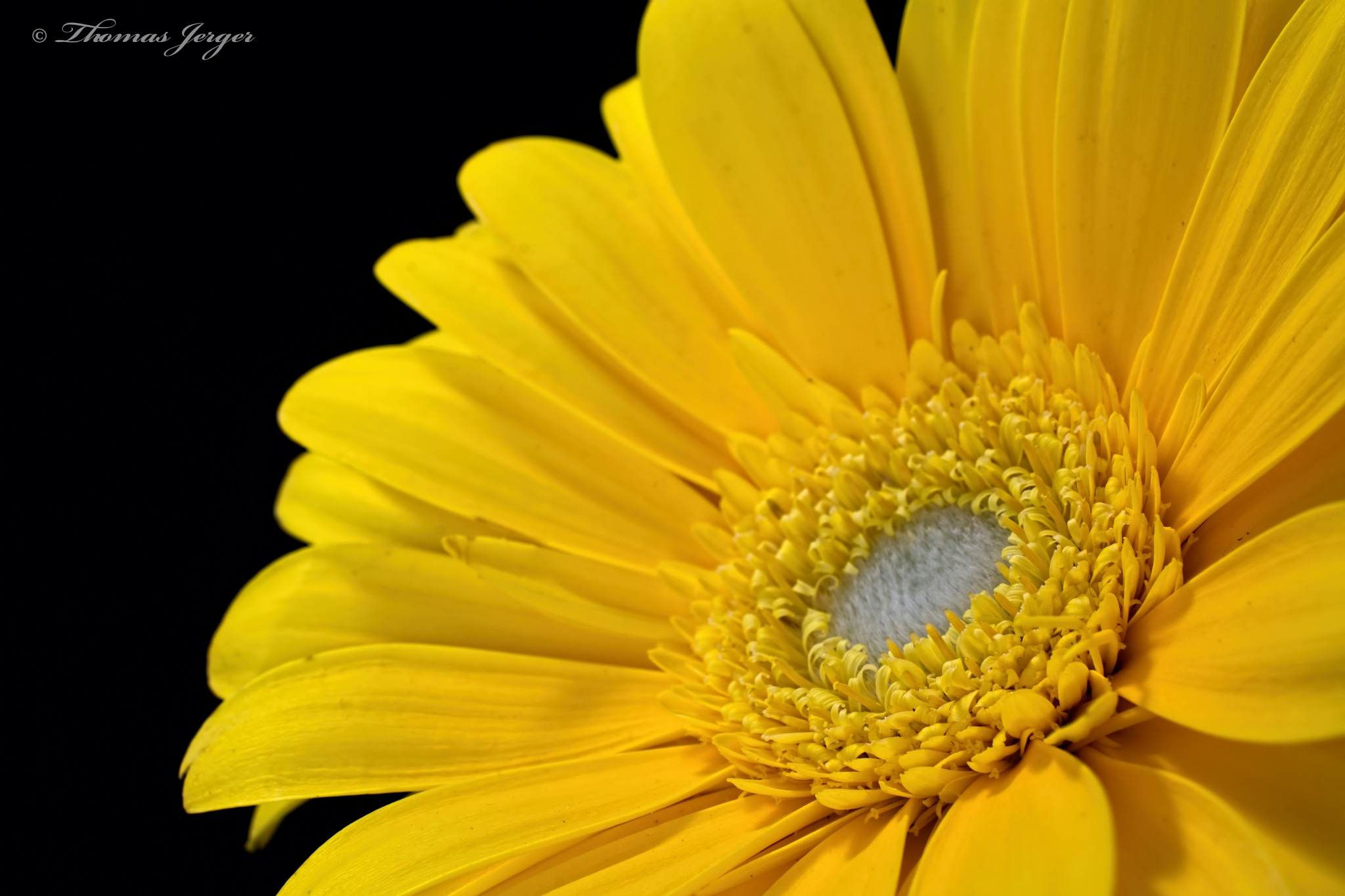 Facing the Sun 0218 by ThomasJerger