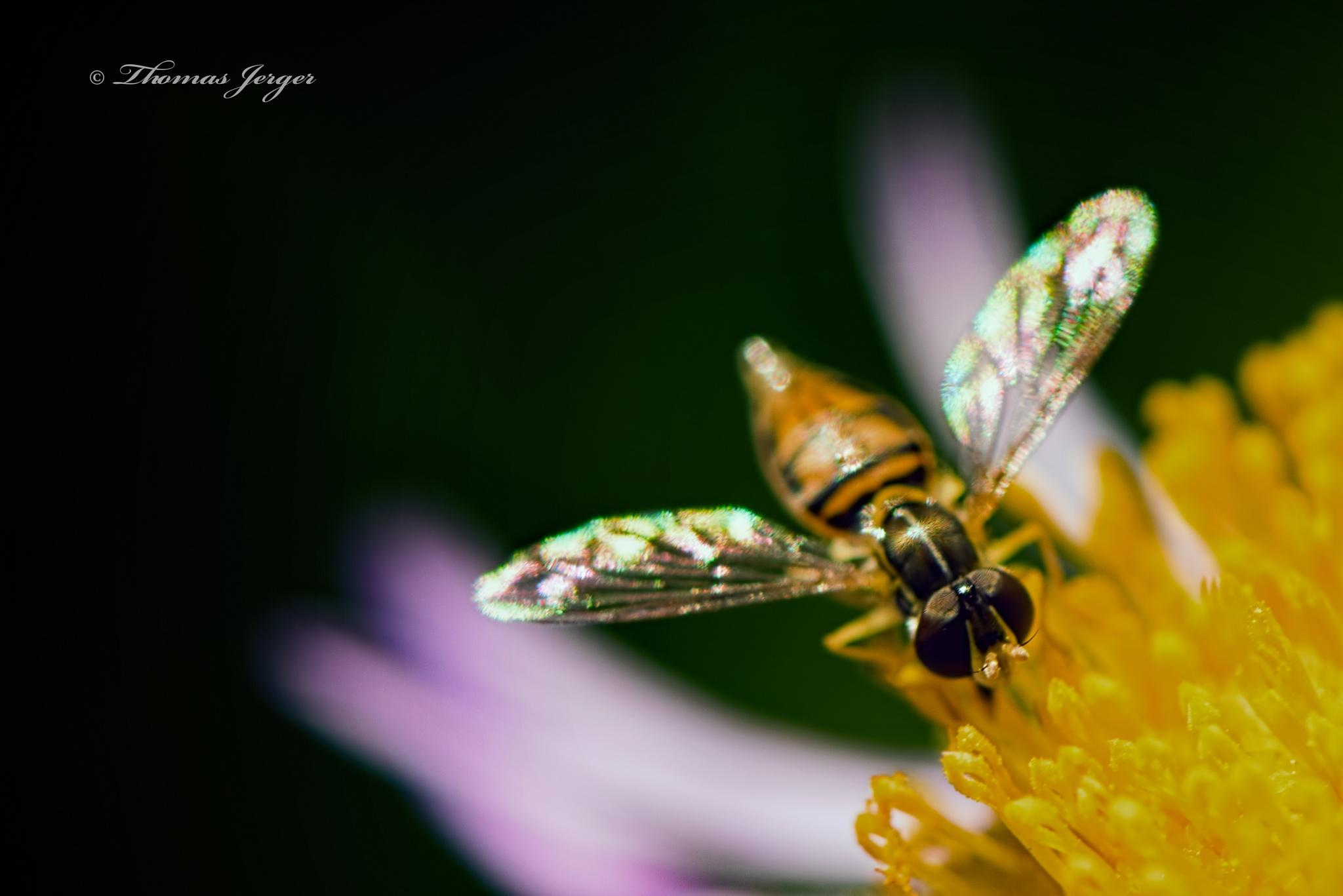 On Wings of Gossamer 0702 by ThomasJerger