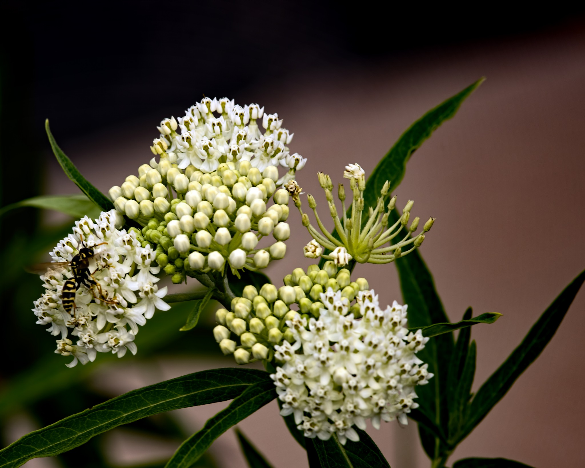 Butterfly Bush with Bee 0811 by ThomasJerger