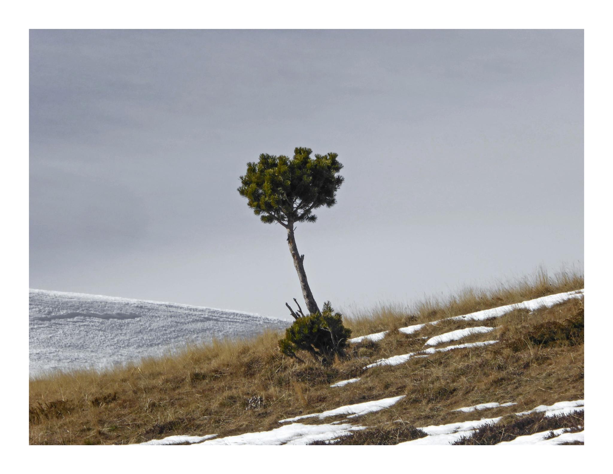 L'arbre by Sandrine Rolfo Lasmolles