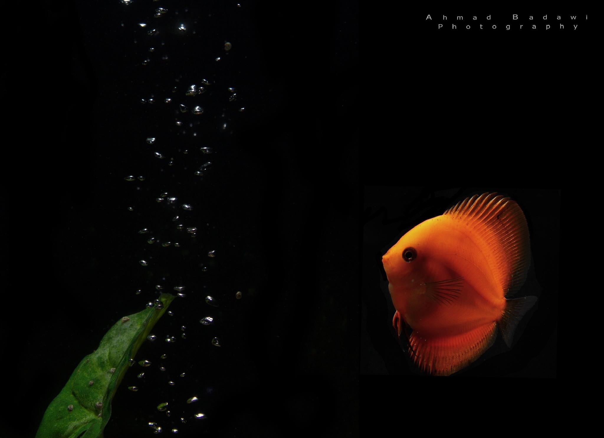 Orange by Ahmad Badawi