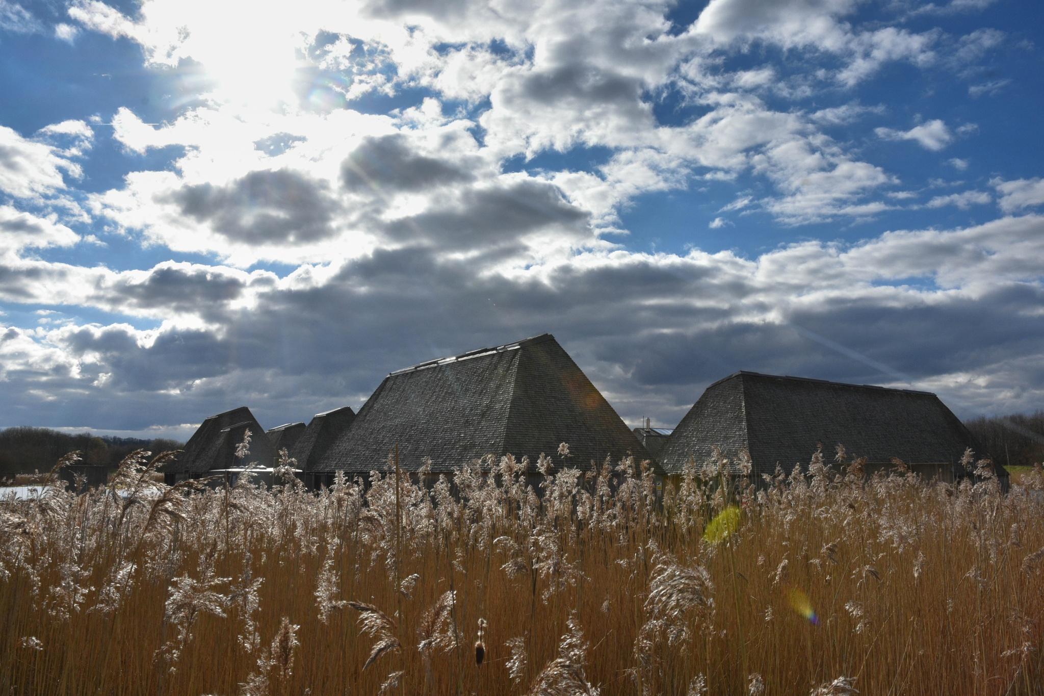 Brockholes Nature Reserve by Steve Bradley