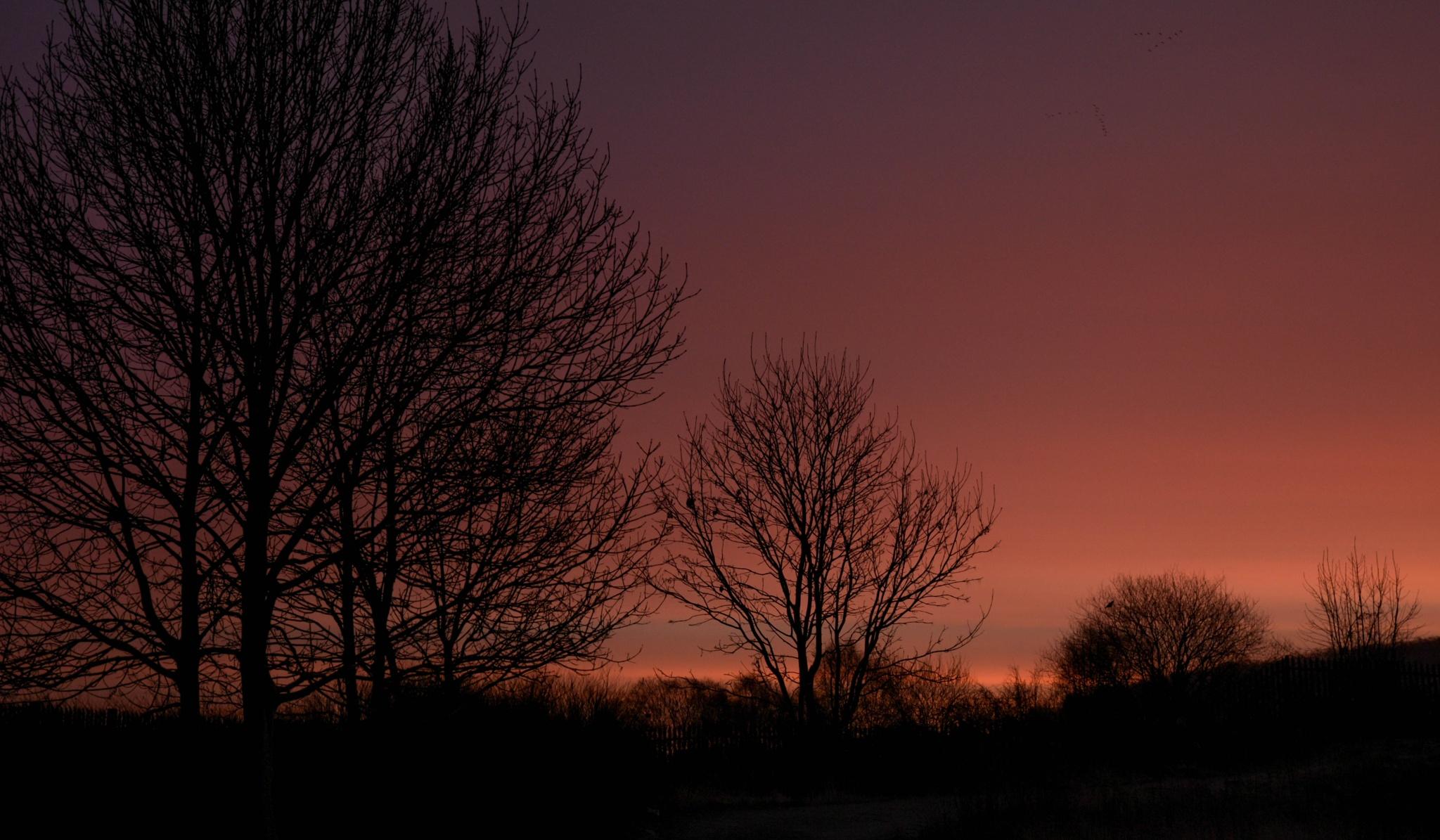 Sunrise by Steve Bradley