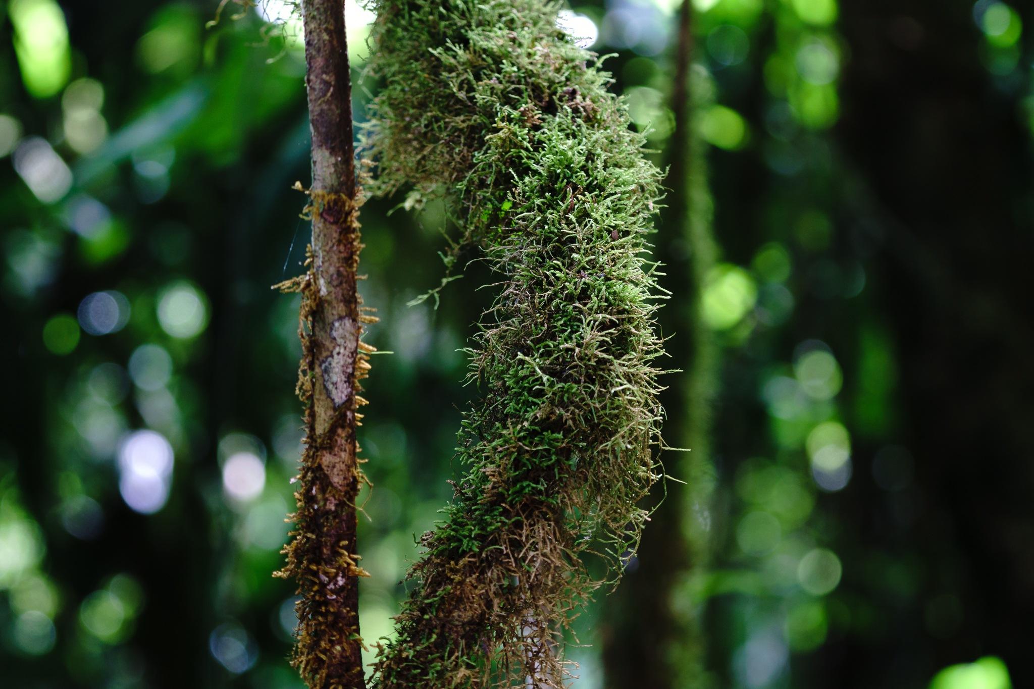 Veragua Rainforest, Costa Rica by Andreas Mariotti