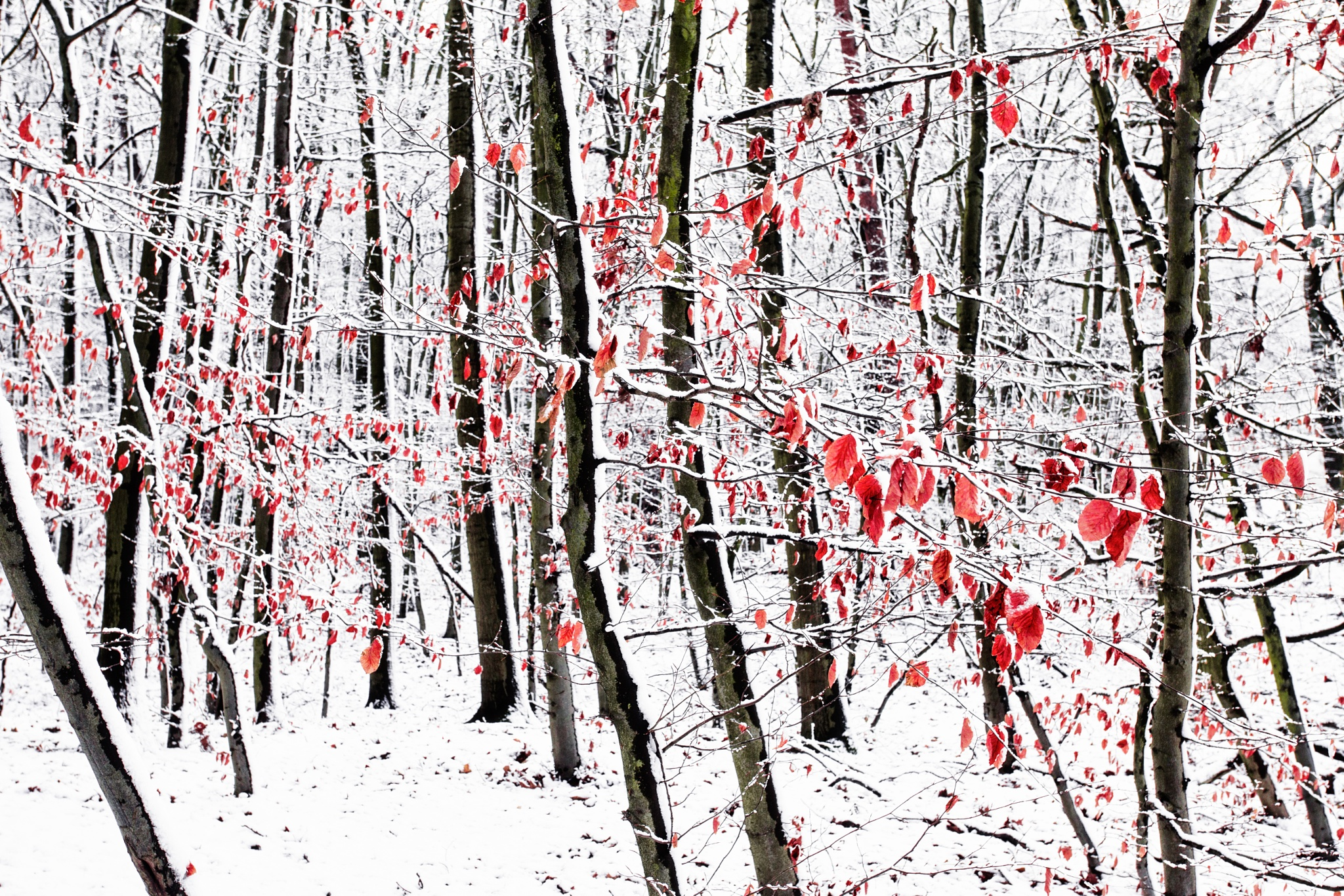Bloody Winter Leaves by Jens Unger