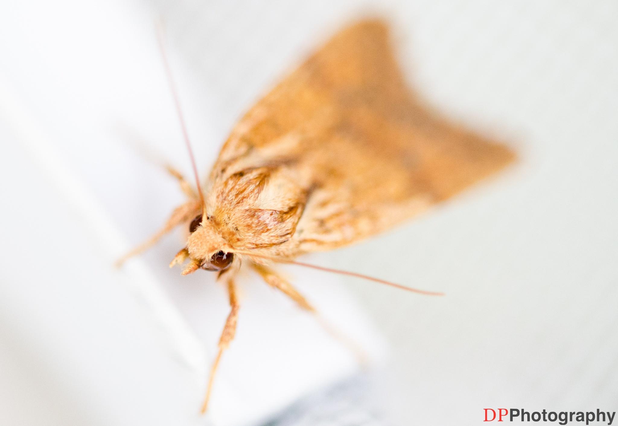 Moth by Derek Pogue