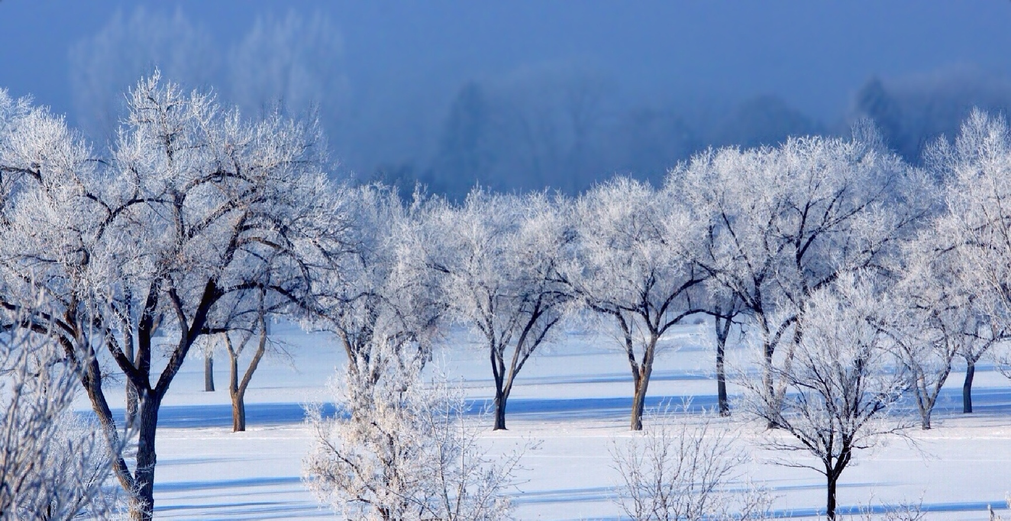 Winter's Blu by Bary_B