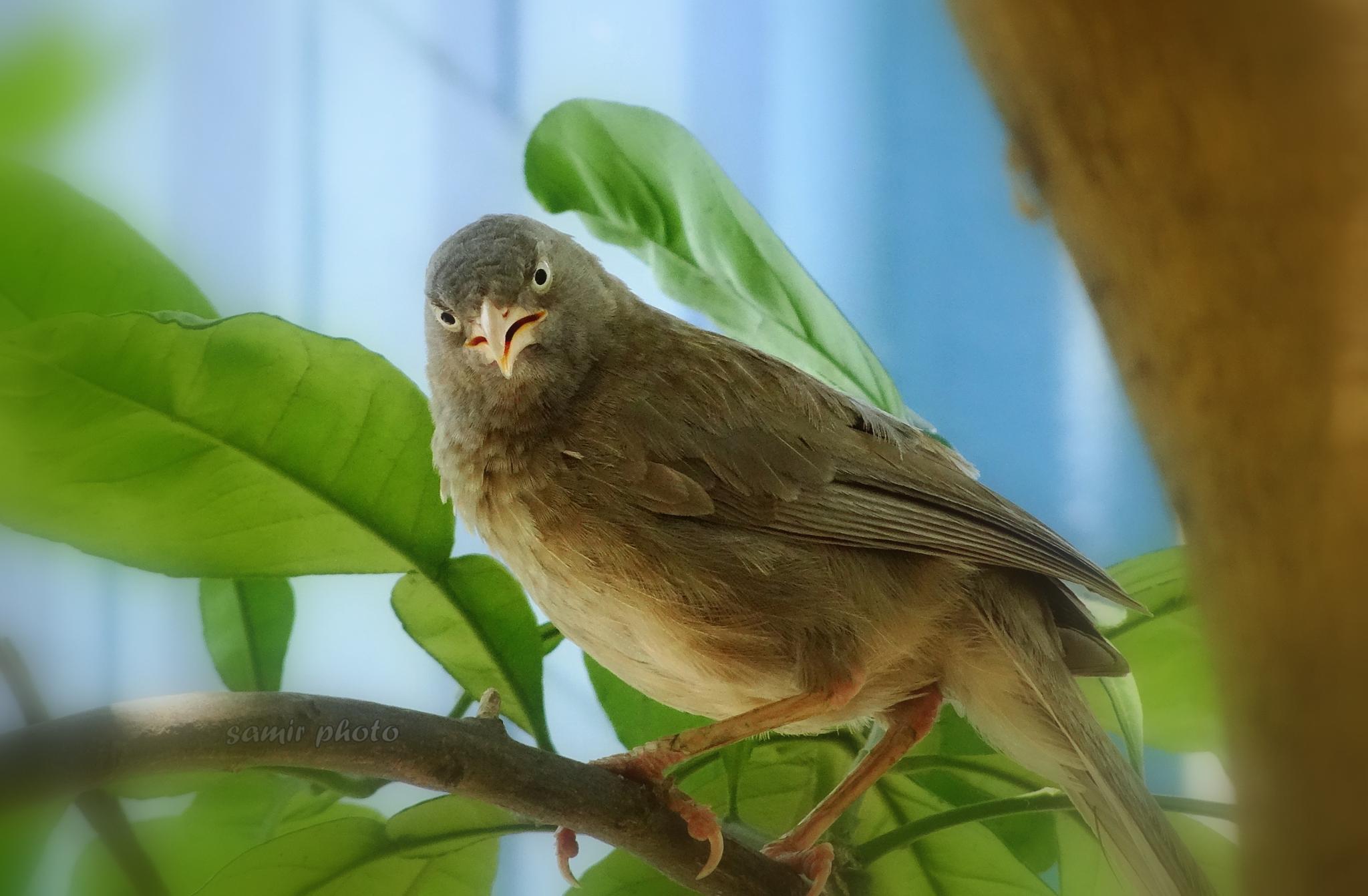 angry bird by samirsarkar