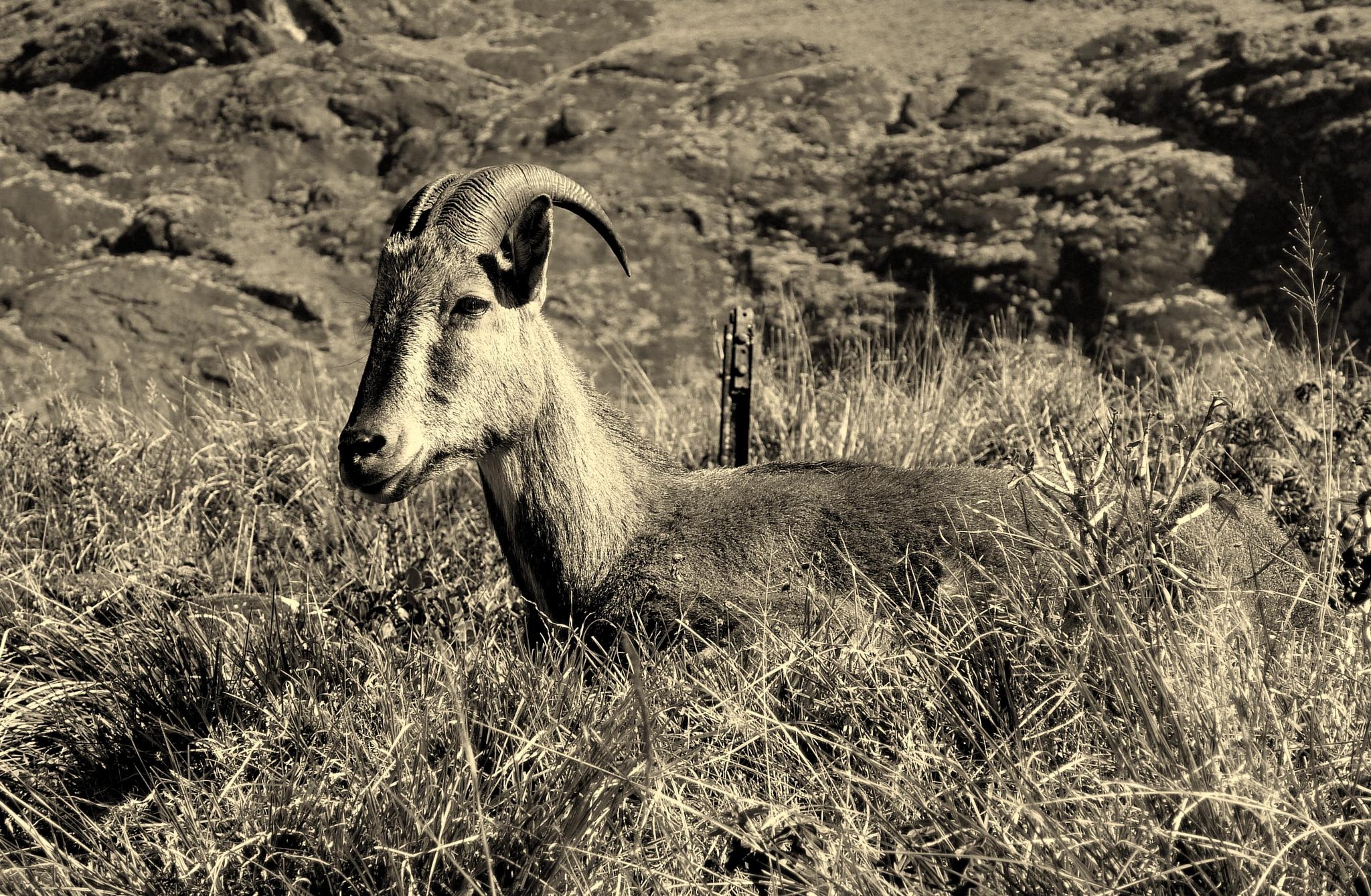 Nil Giri Thar, kerala, india by samirsarkar