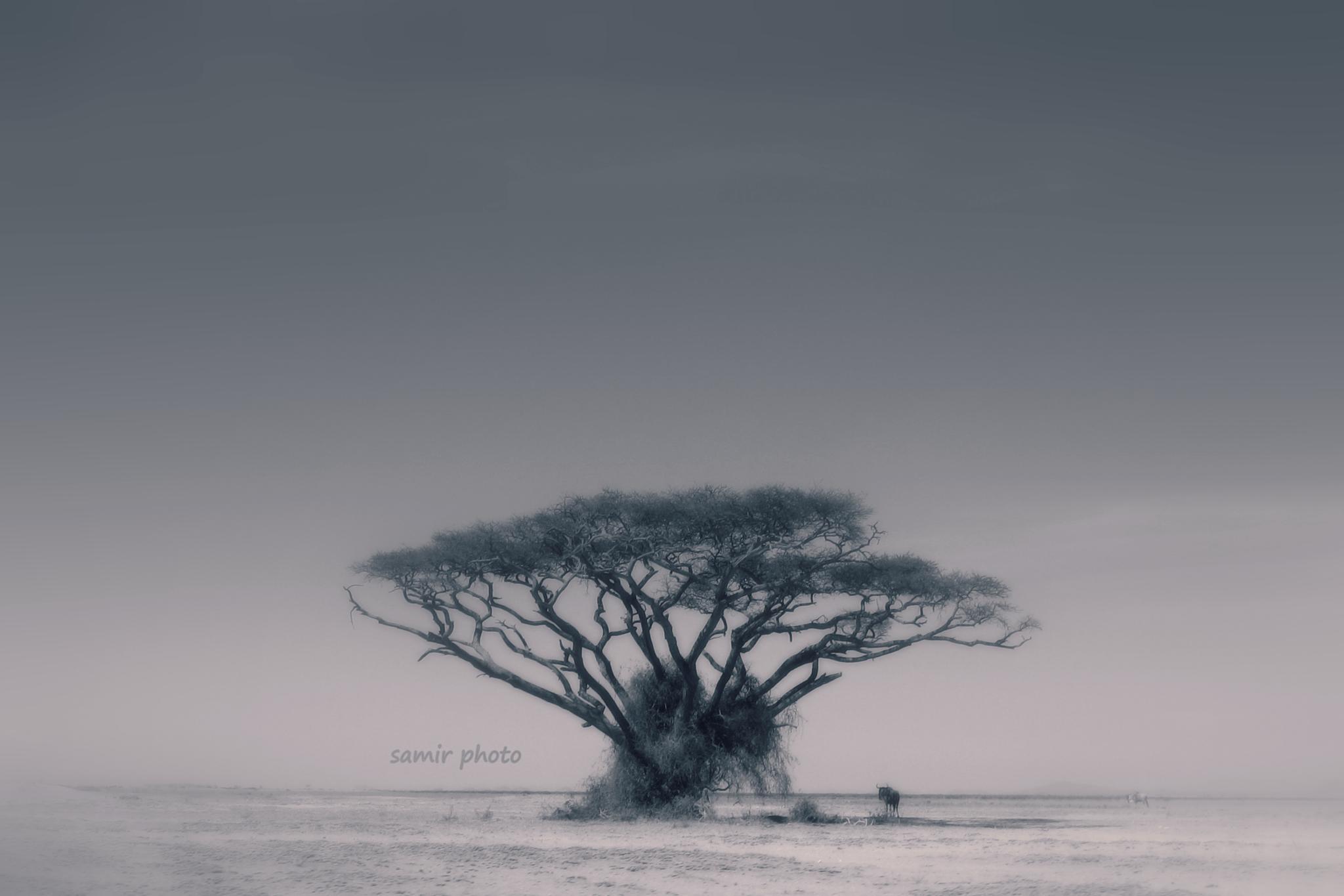 Untitled by samirsarkar