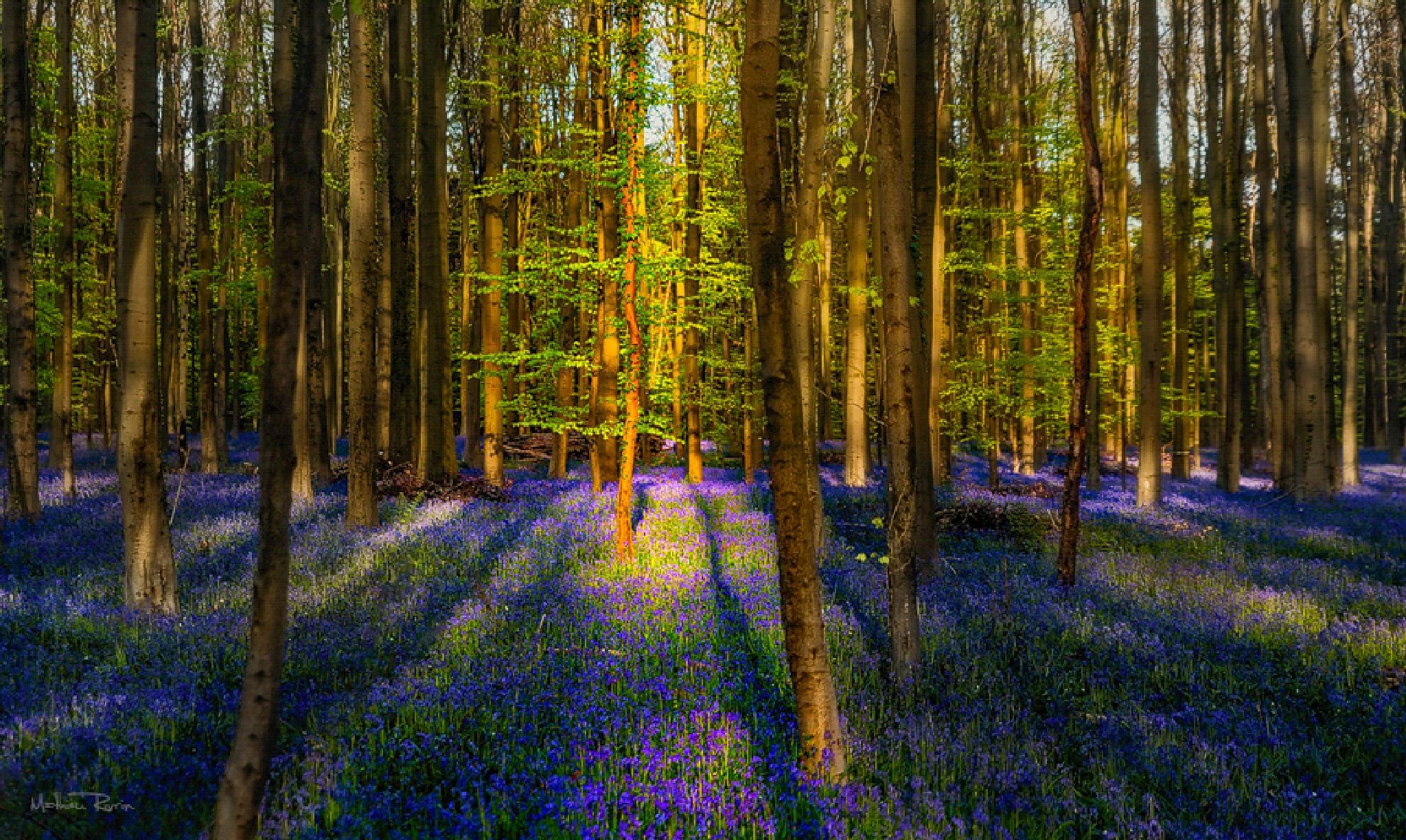 A blue forest by Mathieu_rivrin